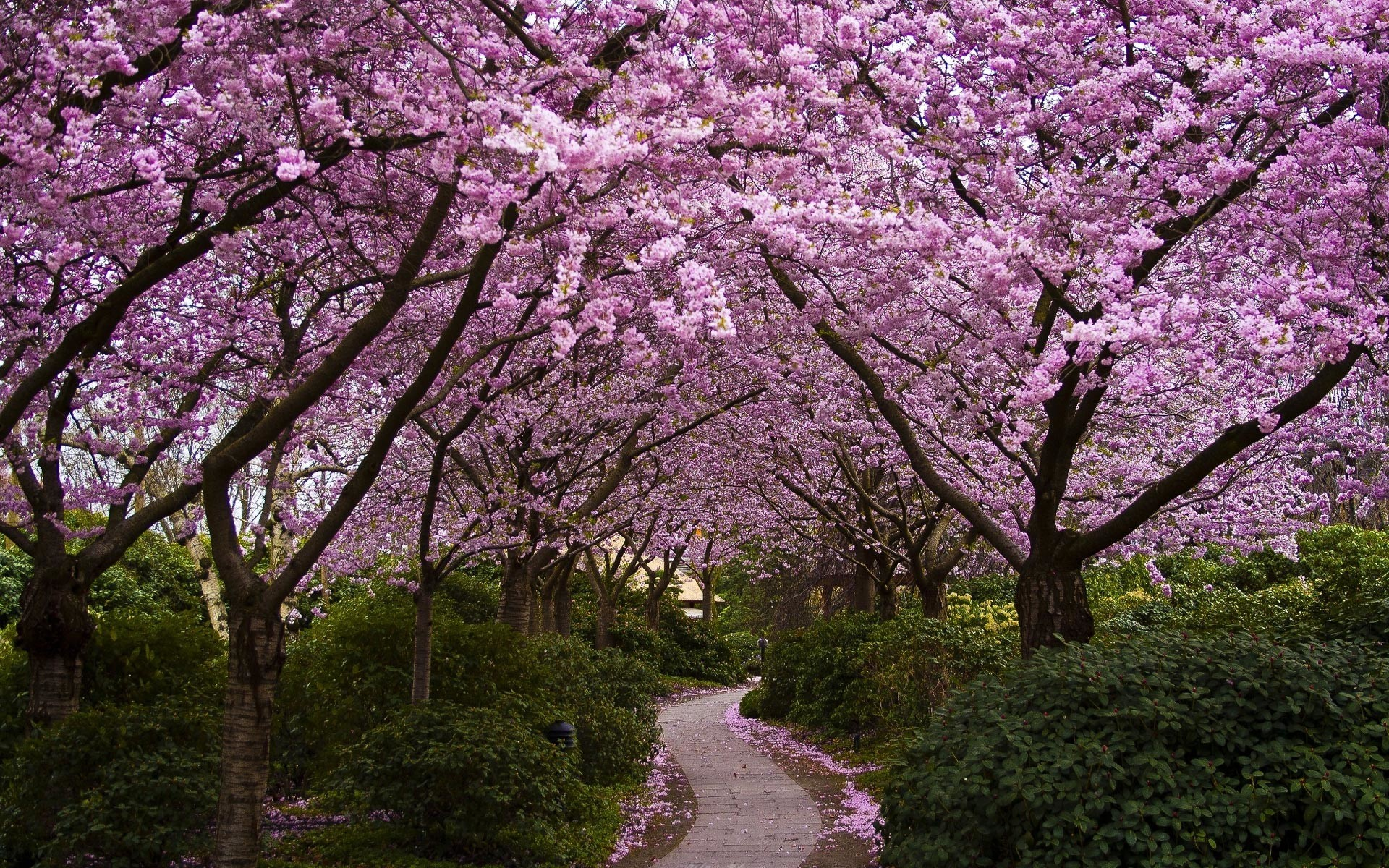Res: 1920x1200, 25 Stunning Spring Wallpapers