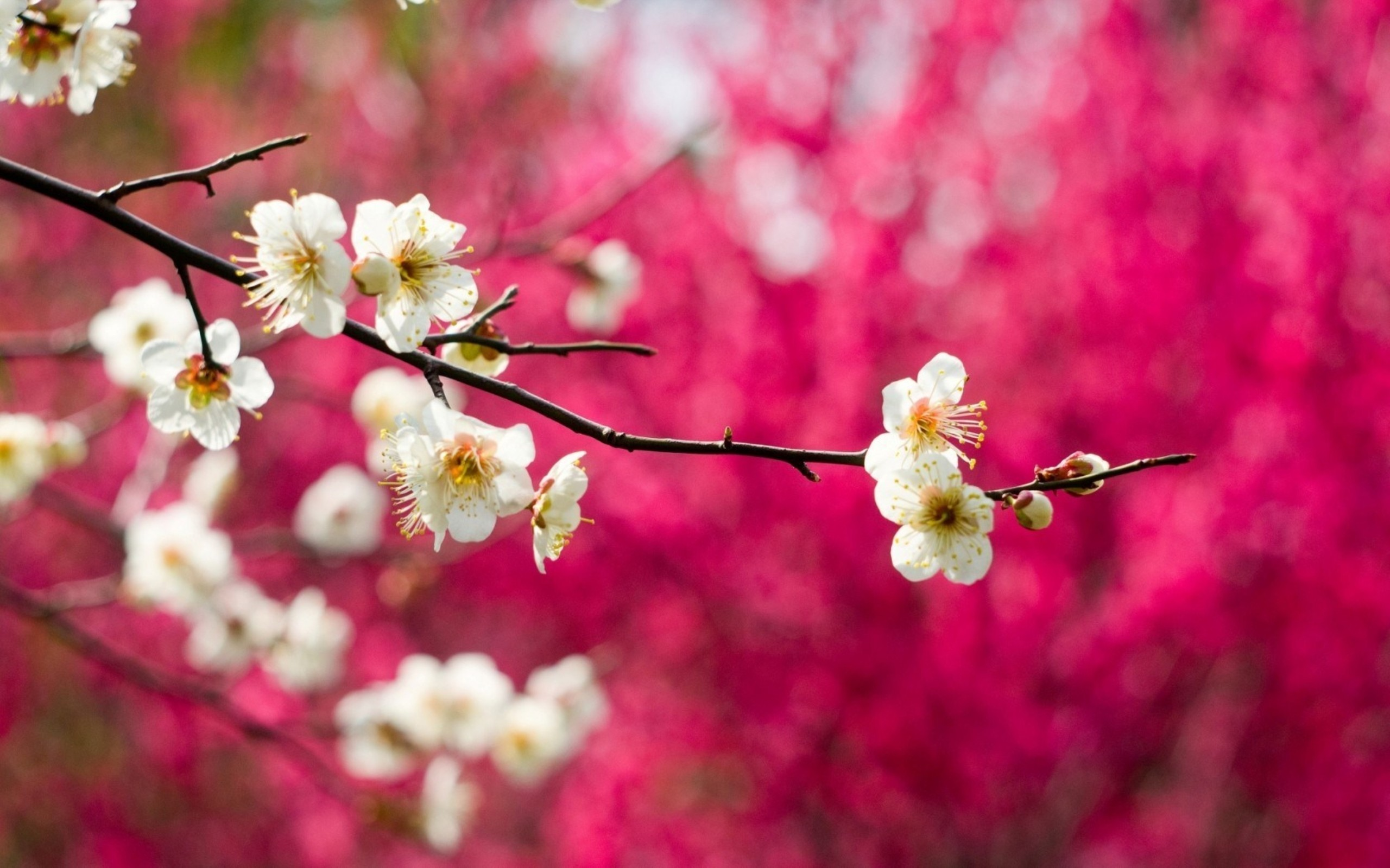 Res: 2560x1600, Spring Nature Wallpaper