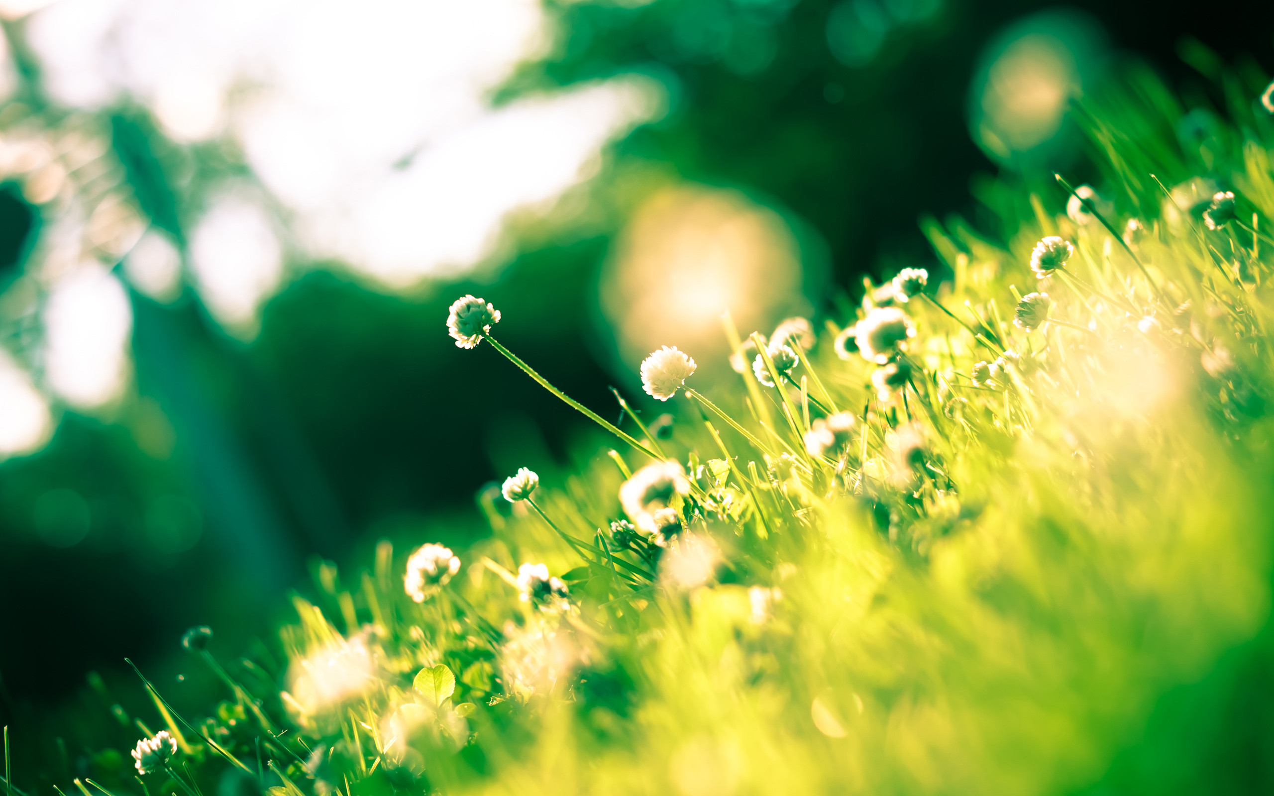Res: 2560x1600, colorful-spring-wallpapers- (12)