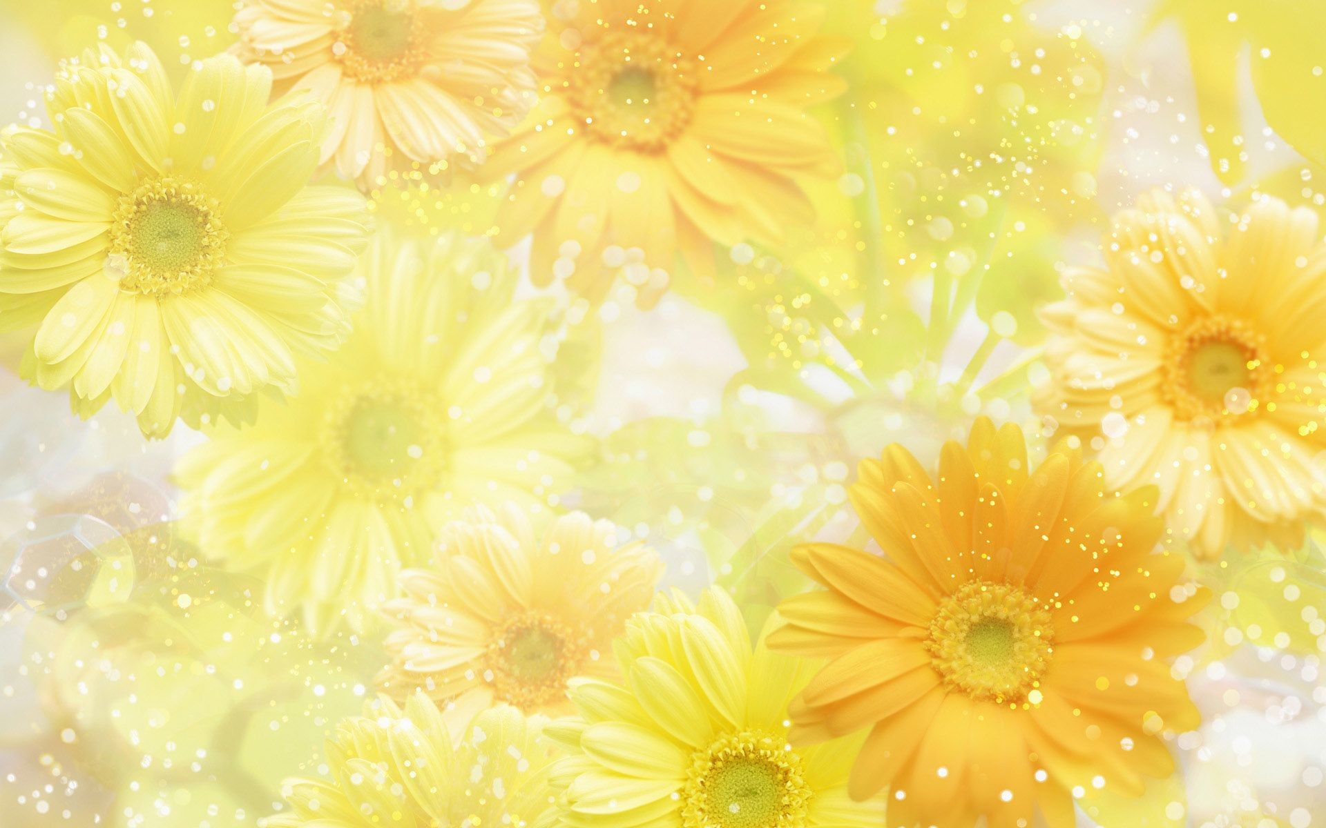 Res: 1920x1200, spring   spring wallpapers hd desktop background free flowers spring  wallpapers .
