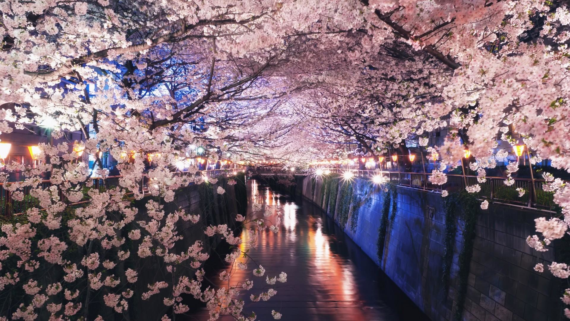Res: 1920x1080, Cute spring flower wallpaper Flower on the river in japan spring ...