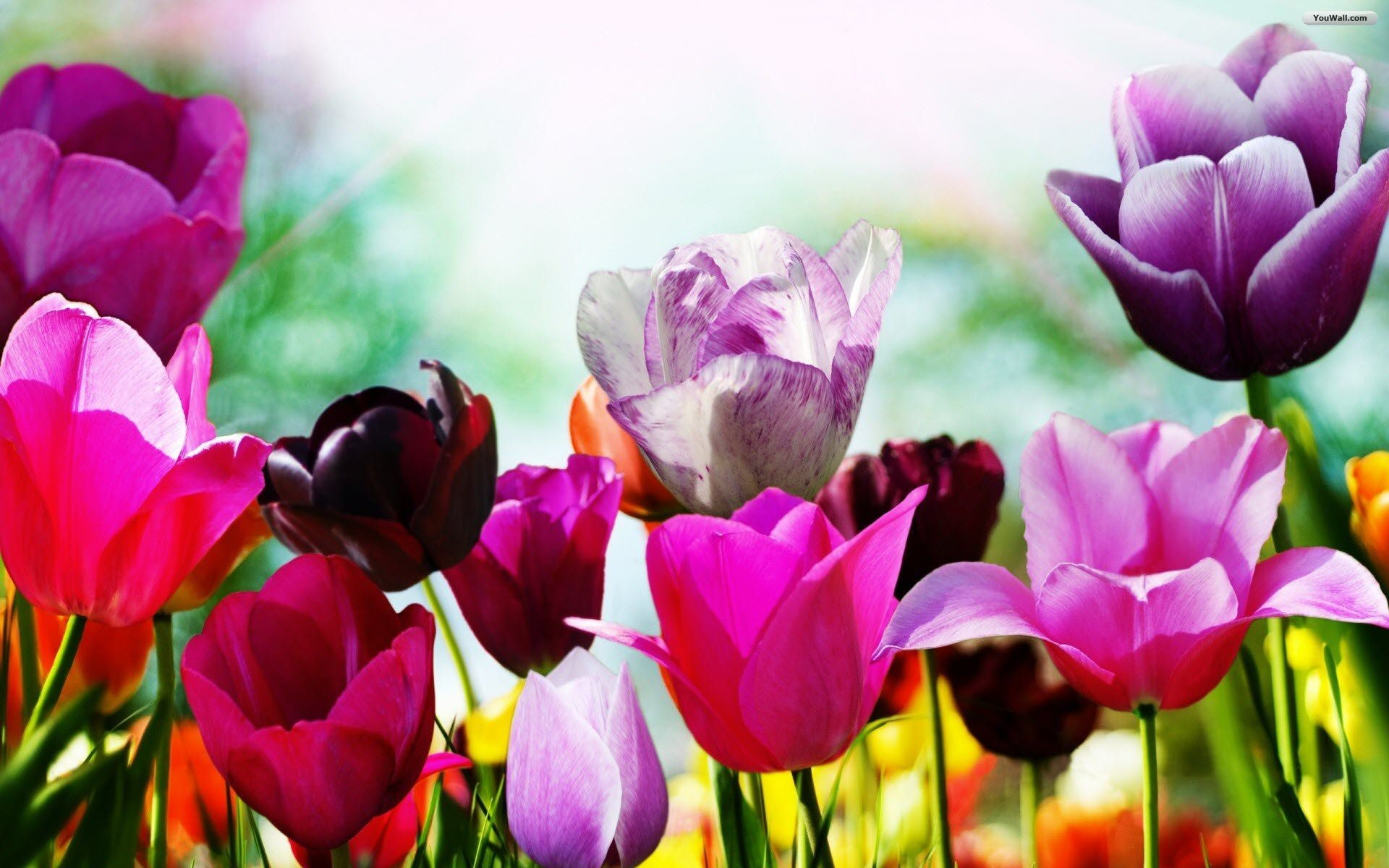 Res: 1920x1200, Spring Awesome Photo – Spring Wallpapers,  for desktop and mobile