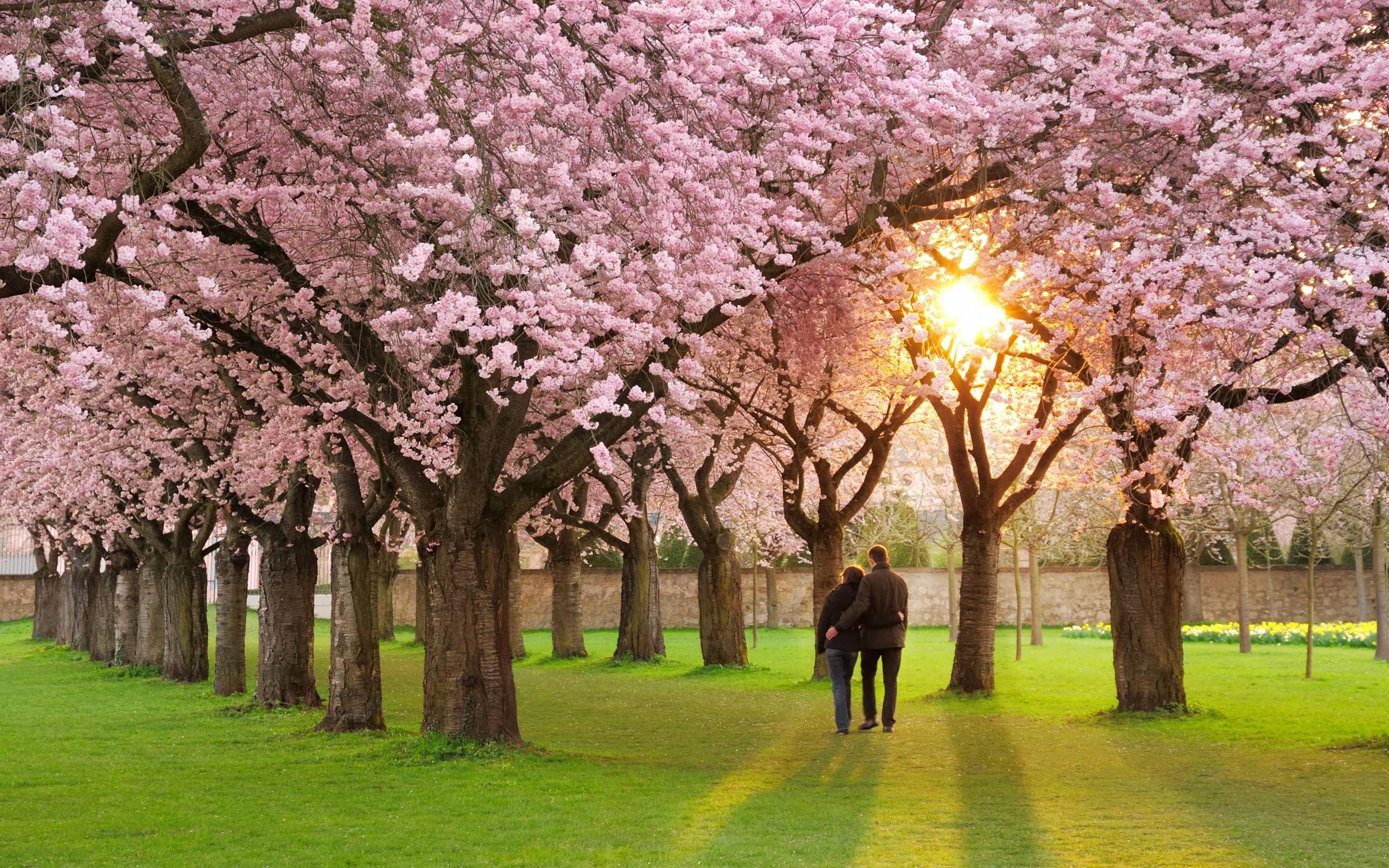 Res: 2560x1600, Wao-romantic-hd-spring-wallpaper-season-free