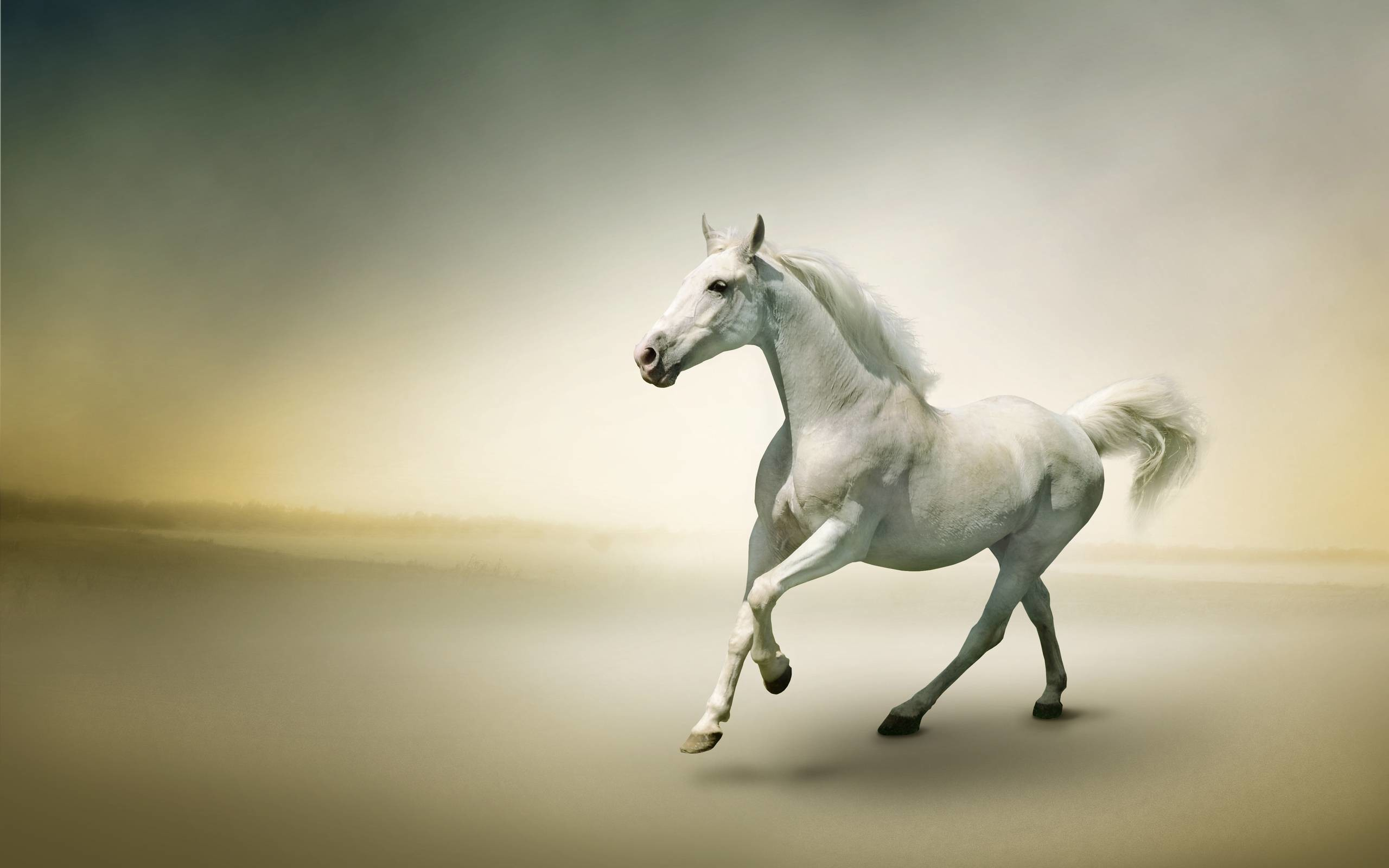 Res: 2560x1600, White Horse Photo Wallpaper #938 Wallpaper computer | best website .