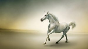 Beautiful Horse wallpapers
