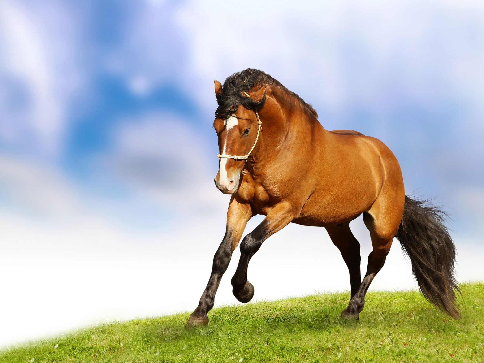 Res: 2048x1536, Wallpapers Beautiful Horses images