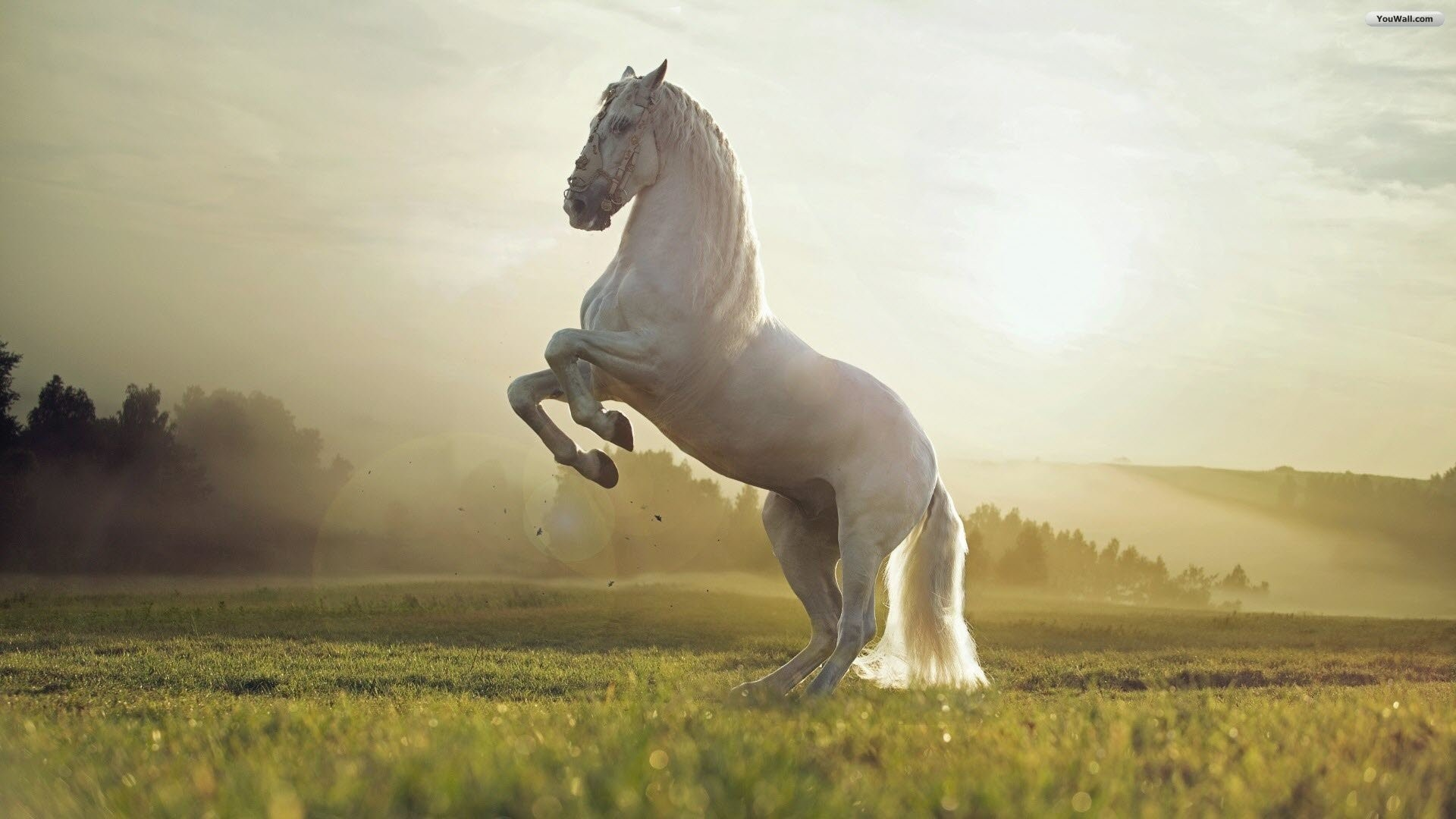 Res: 1920x1080, Photo Collection: Horse Wallpapers, Wallpapers and Pictures Graphics –  download for free