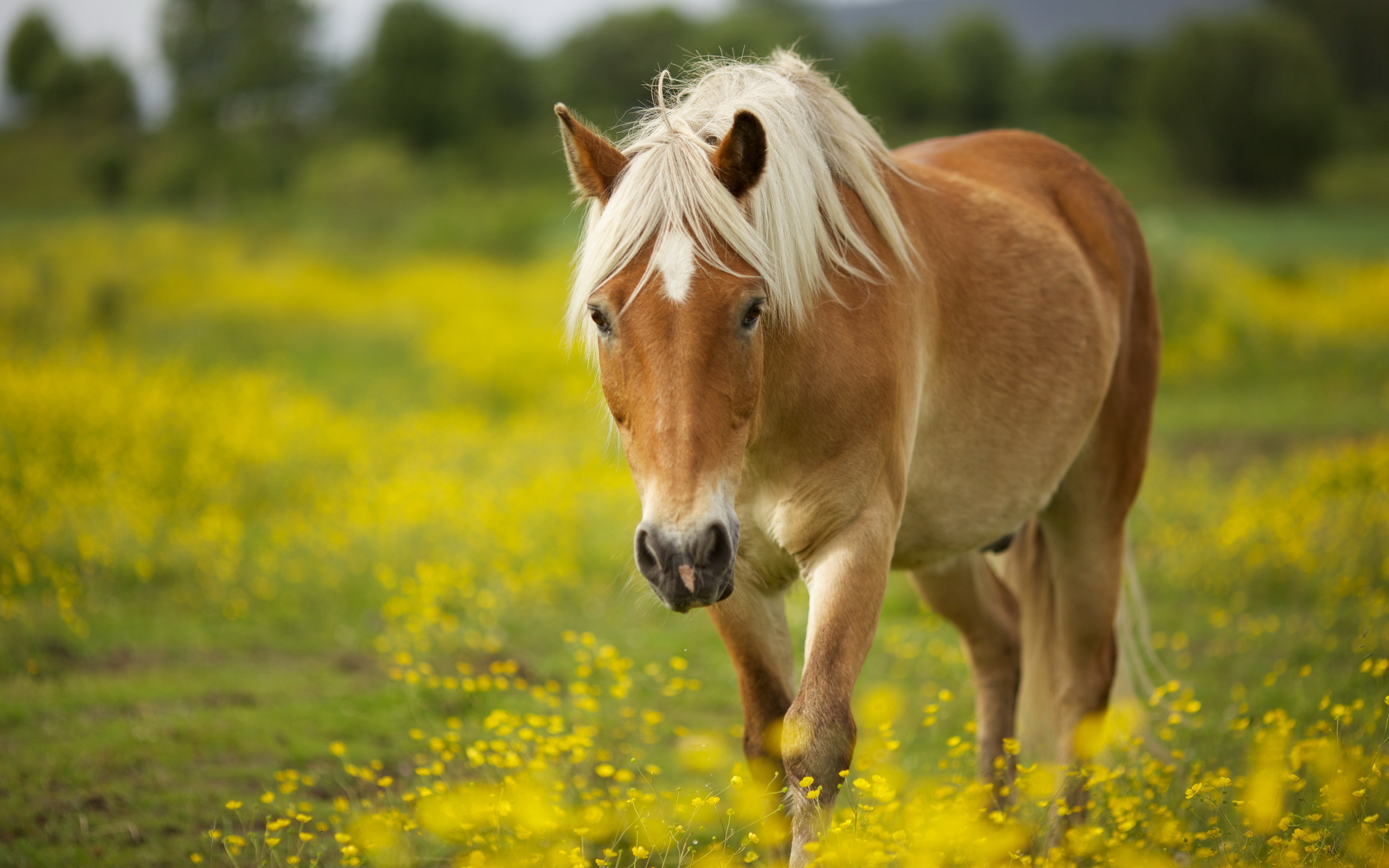 Res: 2560x1600,  Animal - Horse Wallpaper · Download .