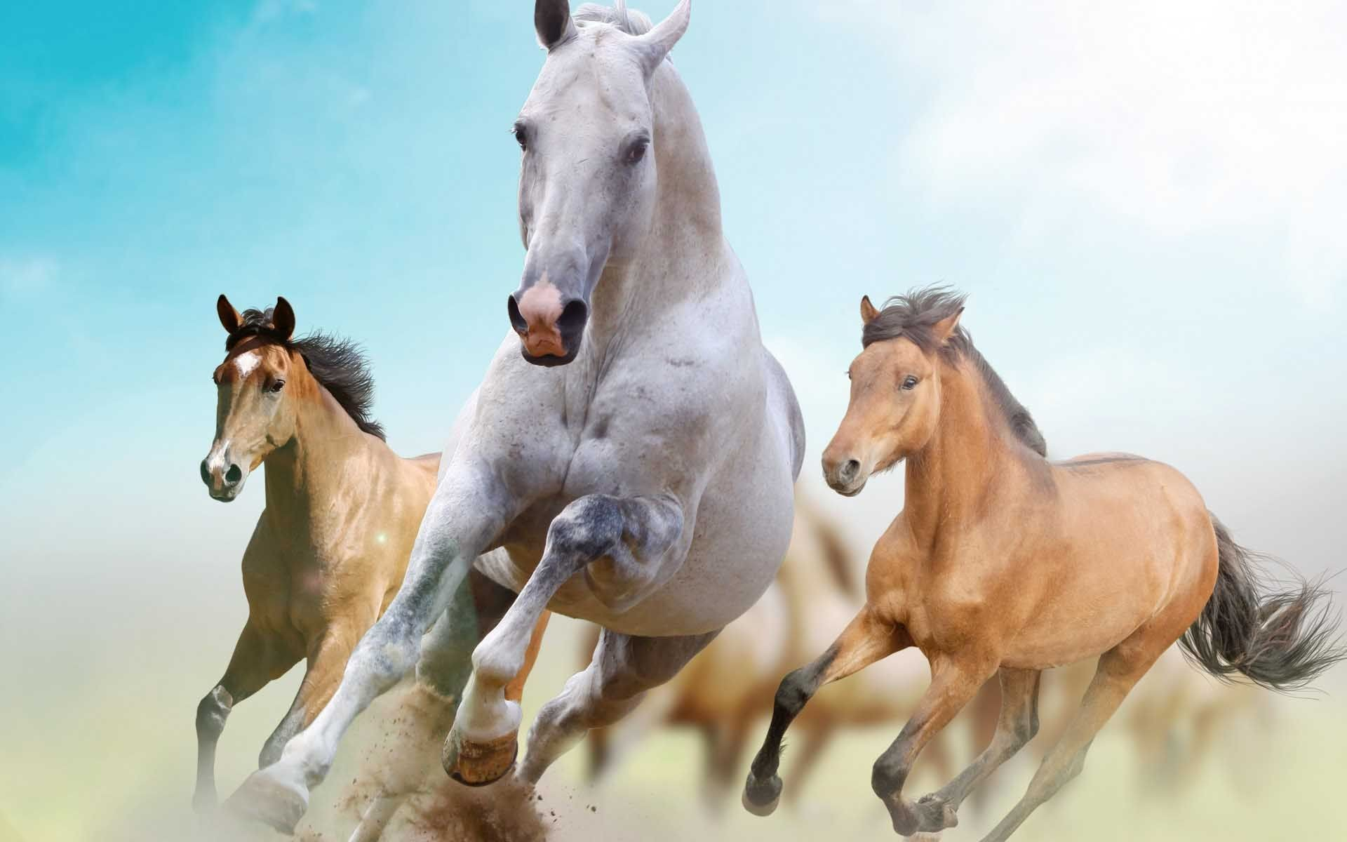 Res: 1920x1200, Beautiful Horses Wallpaper | Find tall and beautiful wallpapers of Racing  Horse to decorate desktop .