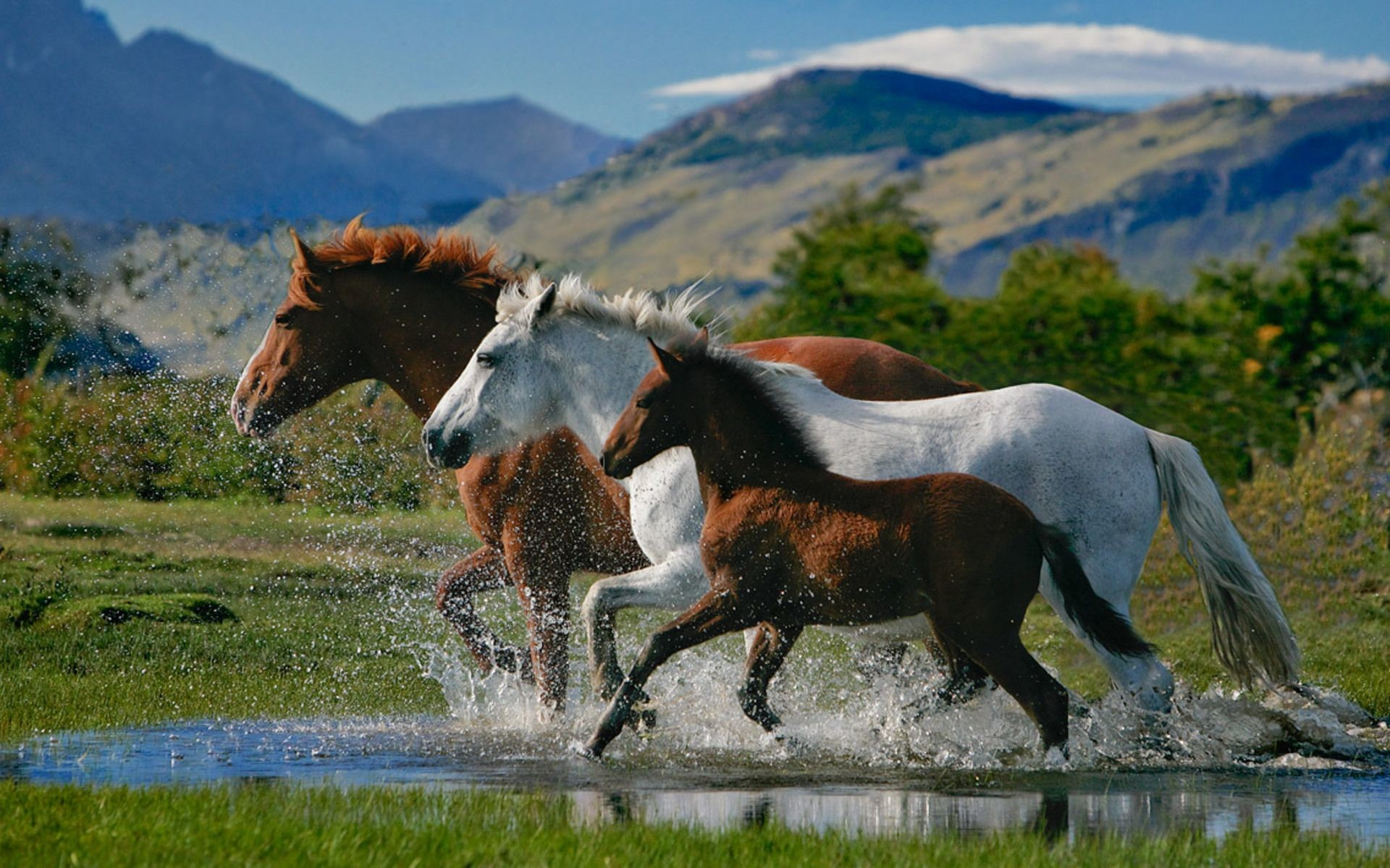 Res: 1920x1200, Beautiful Horses On the Beach | Beautiful Horses Wallpapers.rar Torrent  Download new1 - Animals