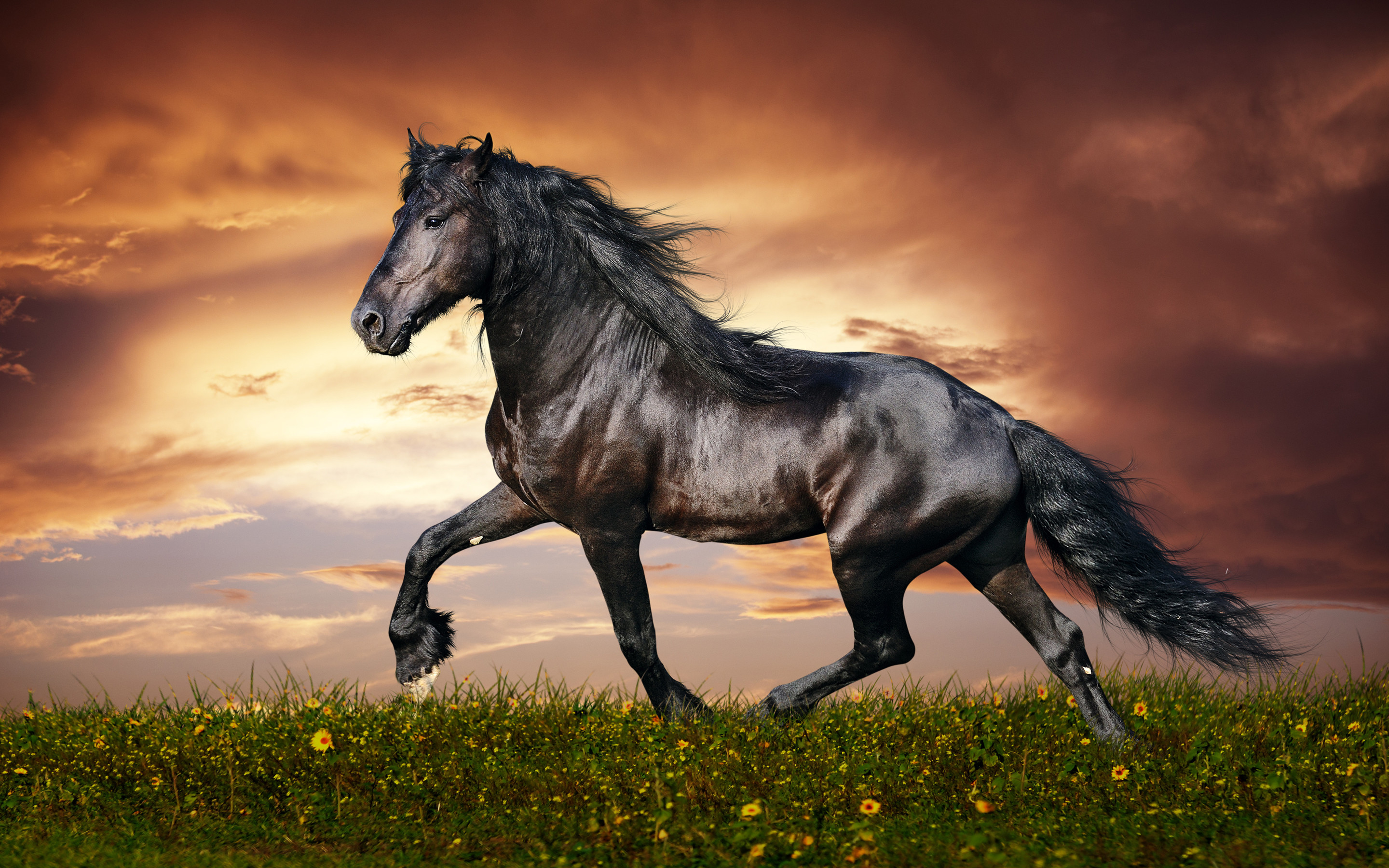 Res: 2880x1800, Download stunning hd black beautiful horse background.