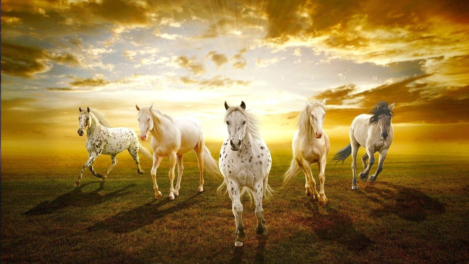 Res: 1920x1080, White Horse Wallpapers Pictures Images