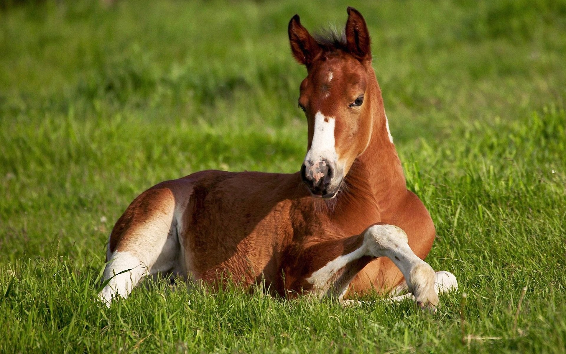 Res: 1920x1200, Image: Beautiful Horse wallpapers and stock photos. Â«
