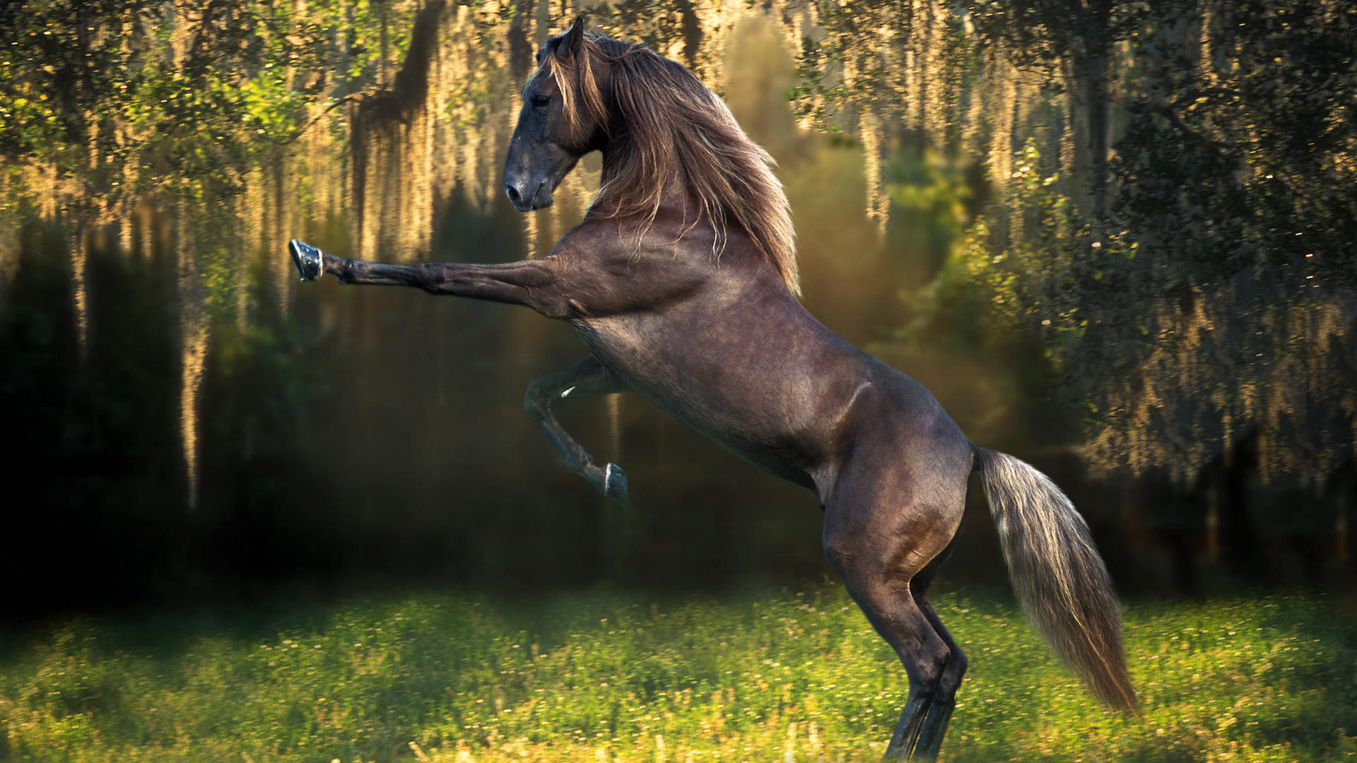 Res: 1920x1080, Awesome Horse Wallpapers | Full HD Pictures