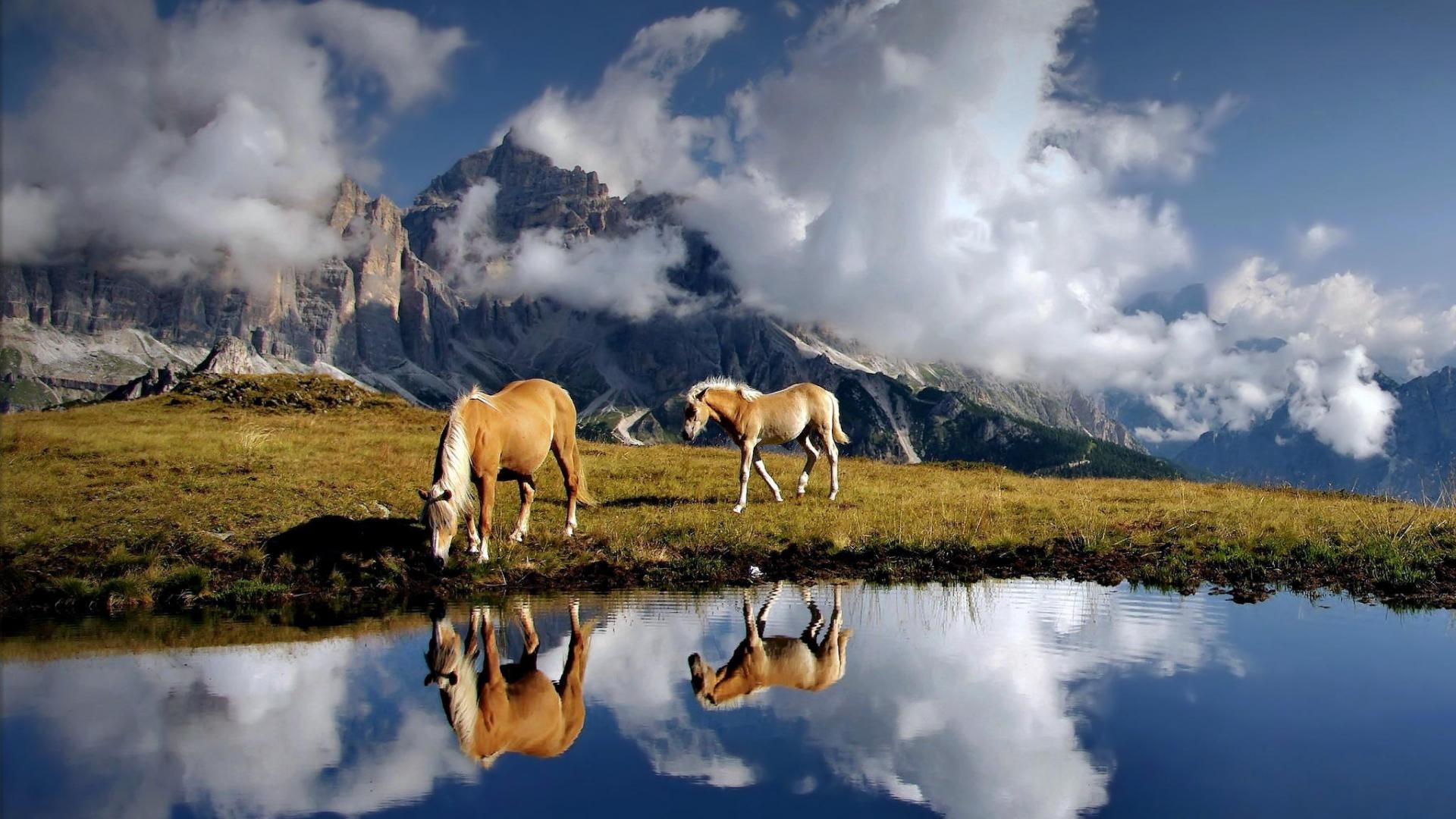 Res: 1920x1080, 23 Beautiful HD Horse Wallpapers