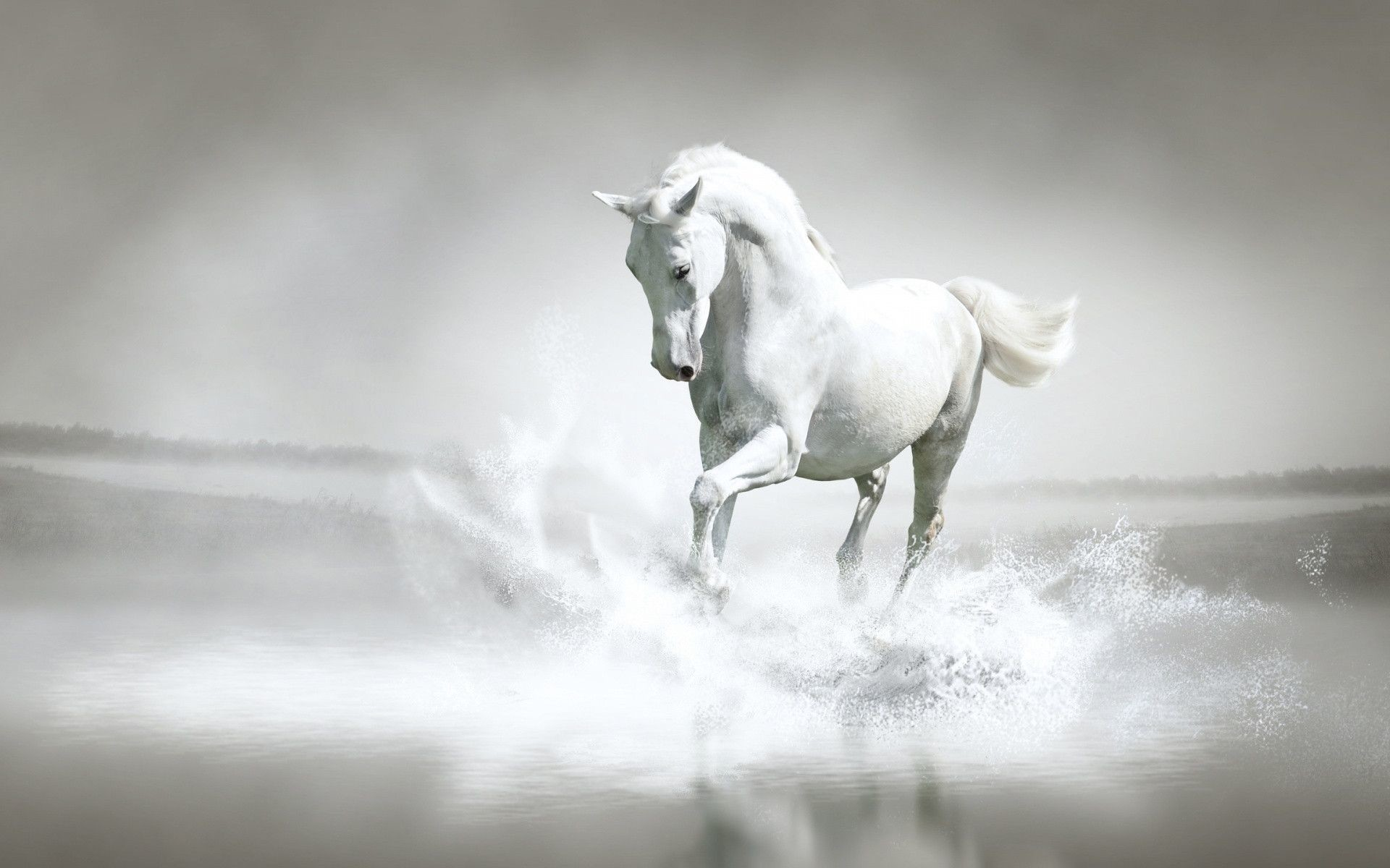 Res: 1920x1200, White Horse Wallpapers With Water