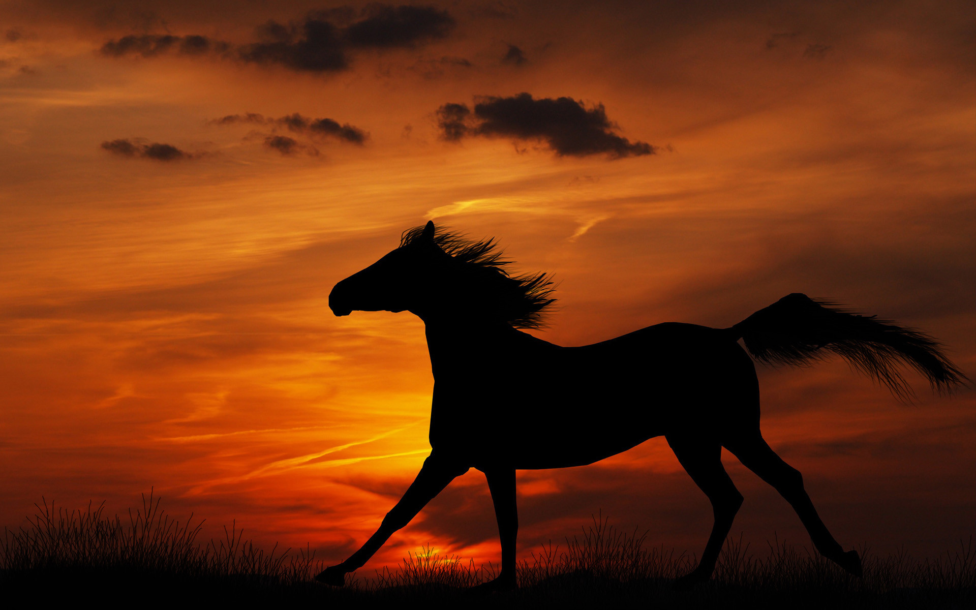 Res: 1920x1200, HDQ Beautiful Horse Images & Wallpapers for PC & Mac, Laptop, Tablet,  Mobile Phone