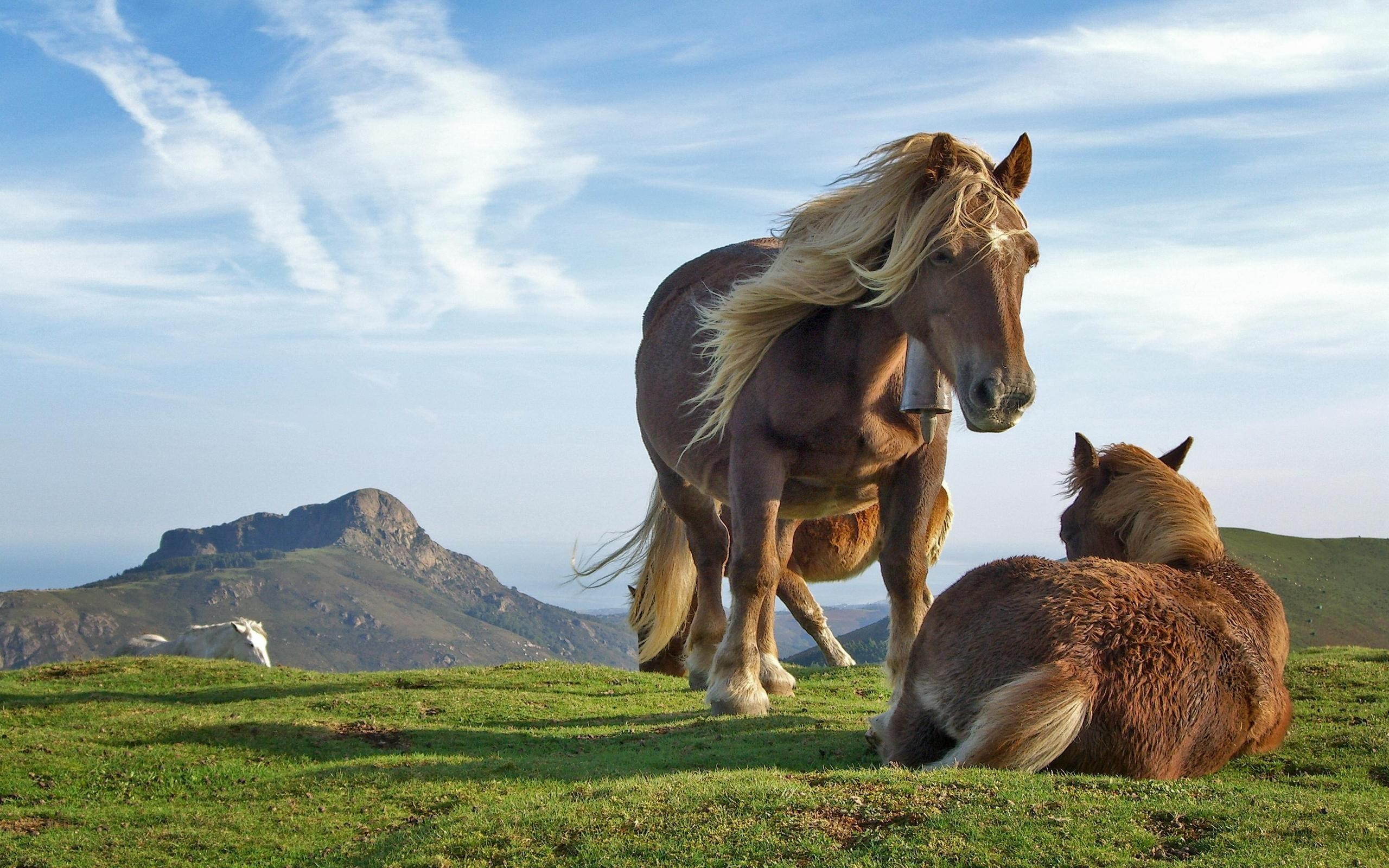 Res: 2560x1600, Image: Beautiful horses wallpapers and stock photos. Â«