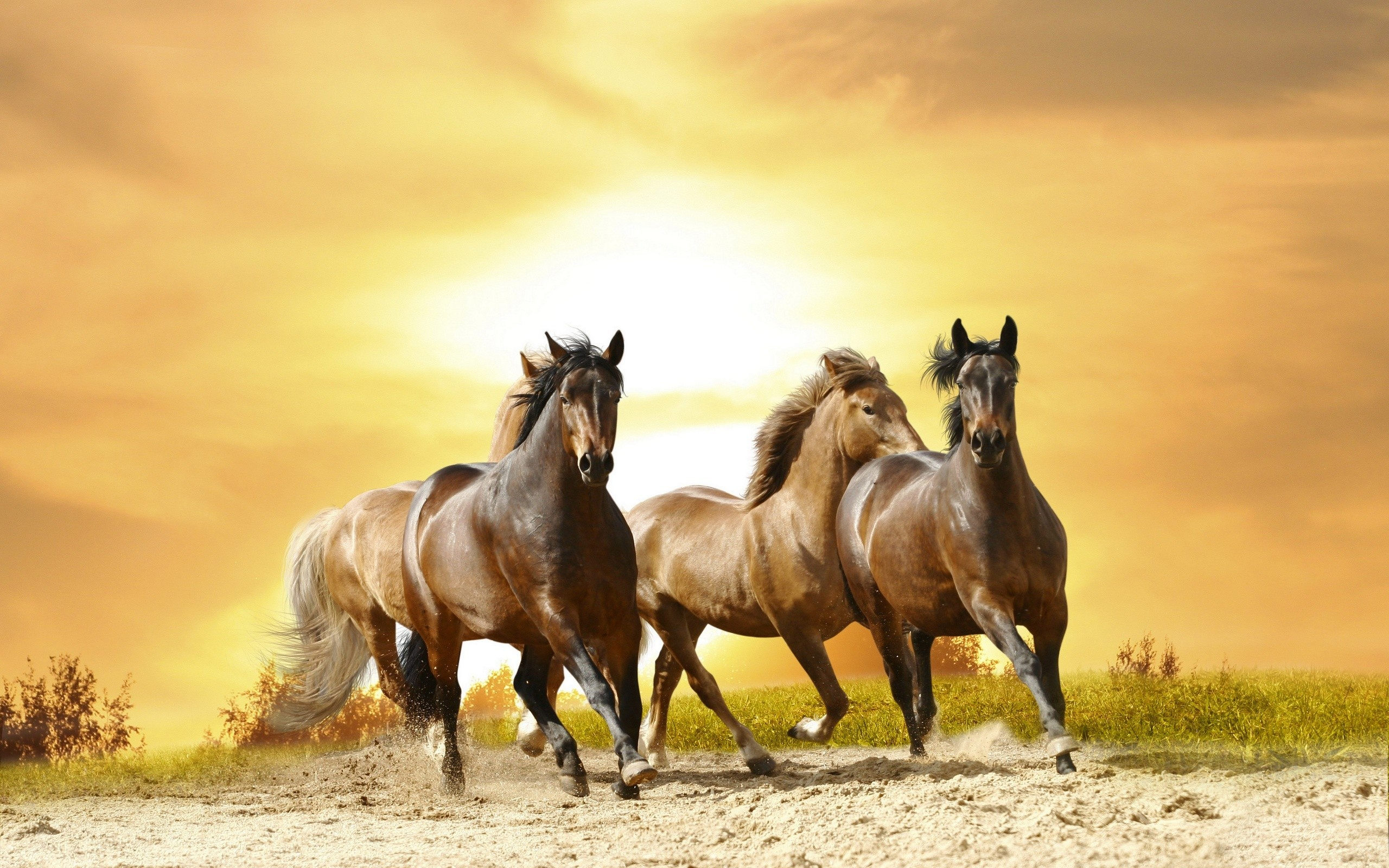 Res: 2560x1600, Horses: Horse Animals Stallion Wild Cool Wallpapers for HD 16:9 .