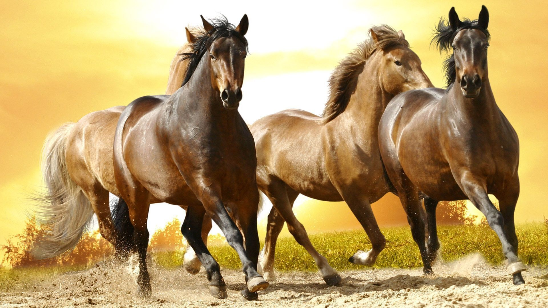 Res: 1920x1080, Wild-Horse-Wallpapers-Gallery-(74-Plus)-PIC-WPW406311