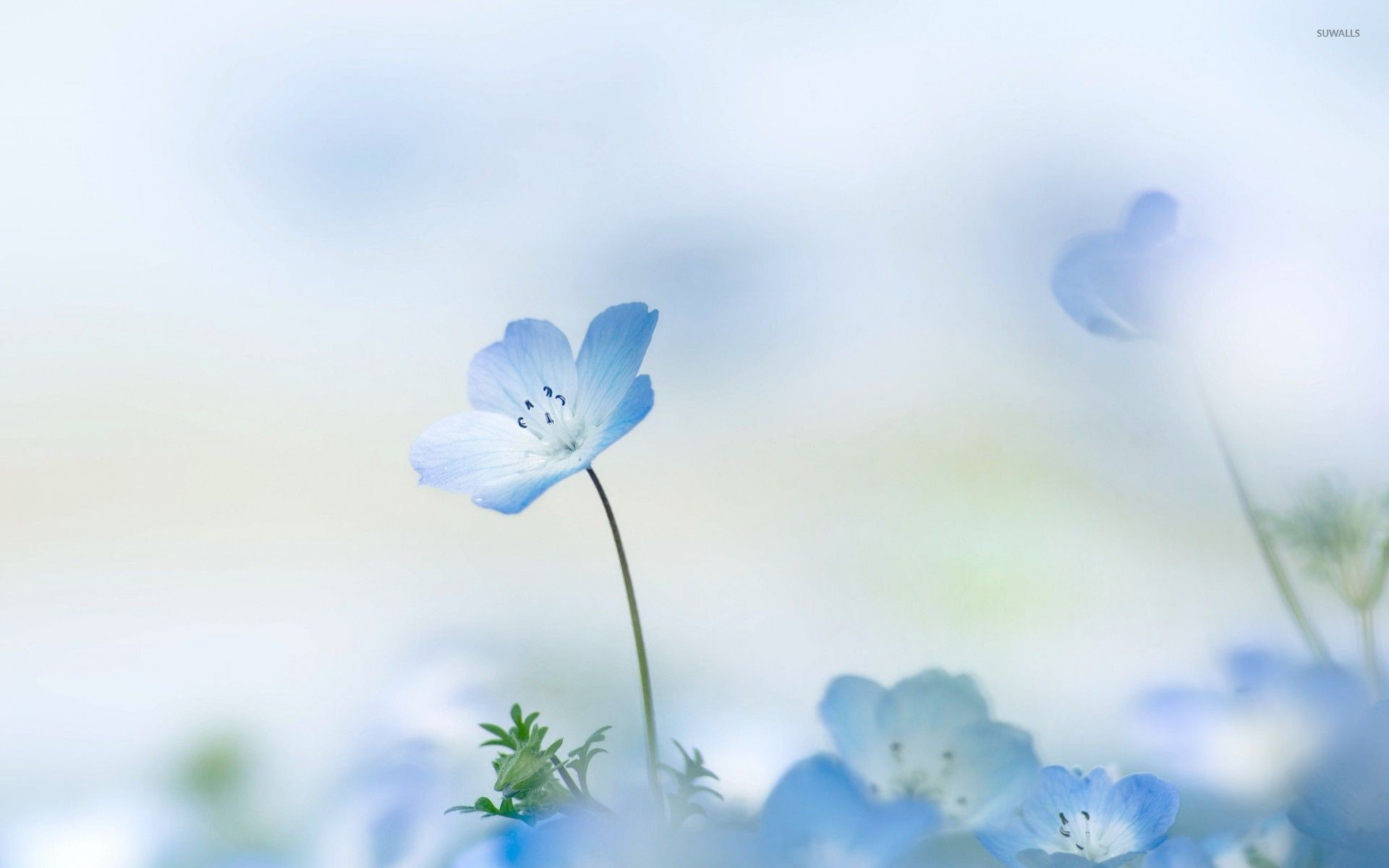 Res: 1920x1200, Small blue flower wallpaper