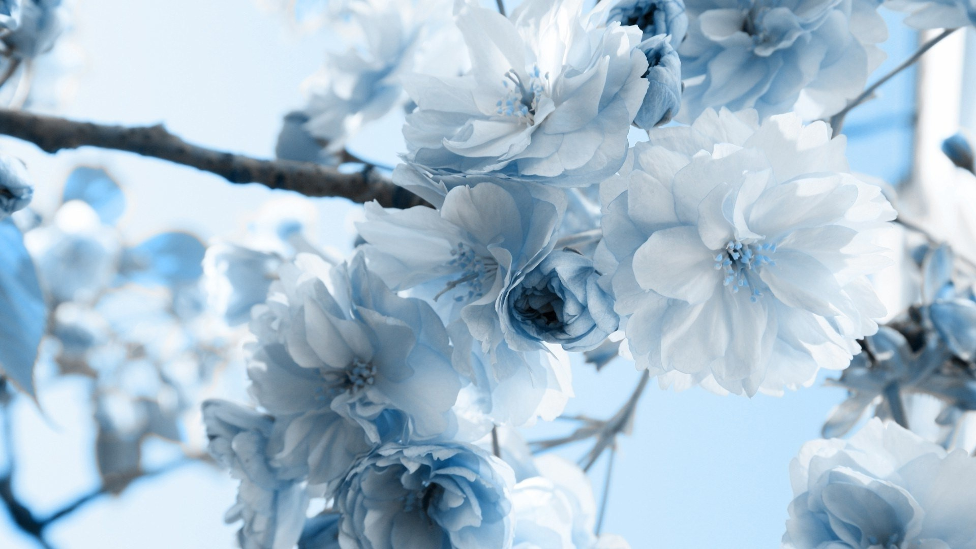 Res: 1920x1080, 60 Beautiful Flowers Wallpapers [Wallpaper Wednesday] Hongkiat - HD  Wallpapers