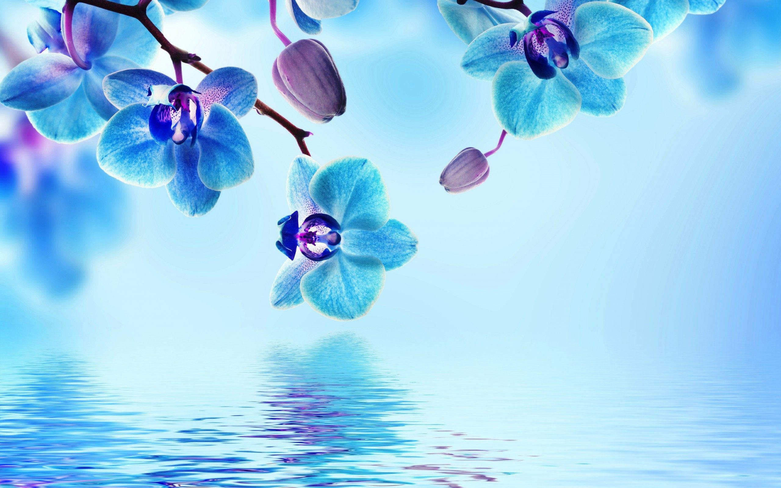 Res: 2560x1600, Blue Flower Wallpapers Photo