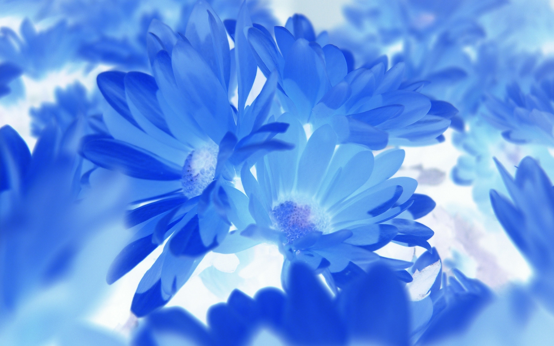Res: 1920x1200, Hd Blue Flowers Wallpaper 7 Wide Wallpaper