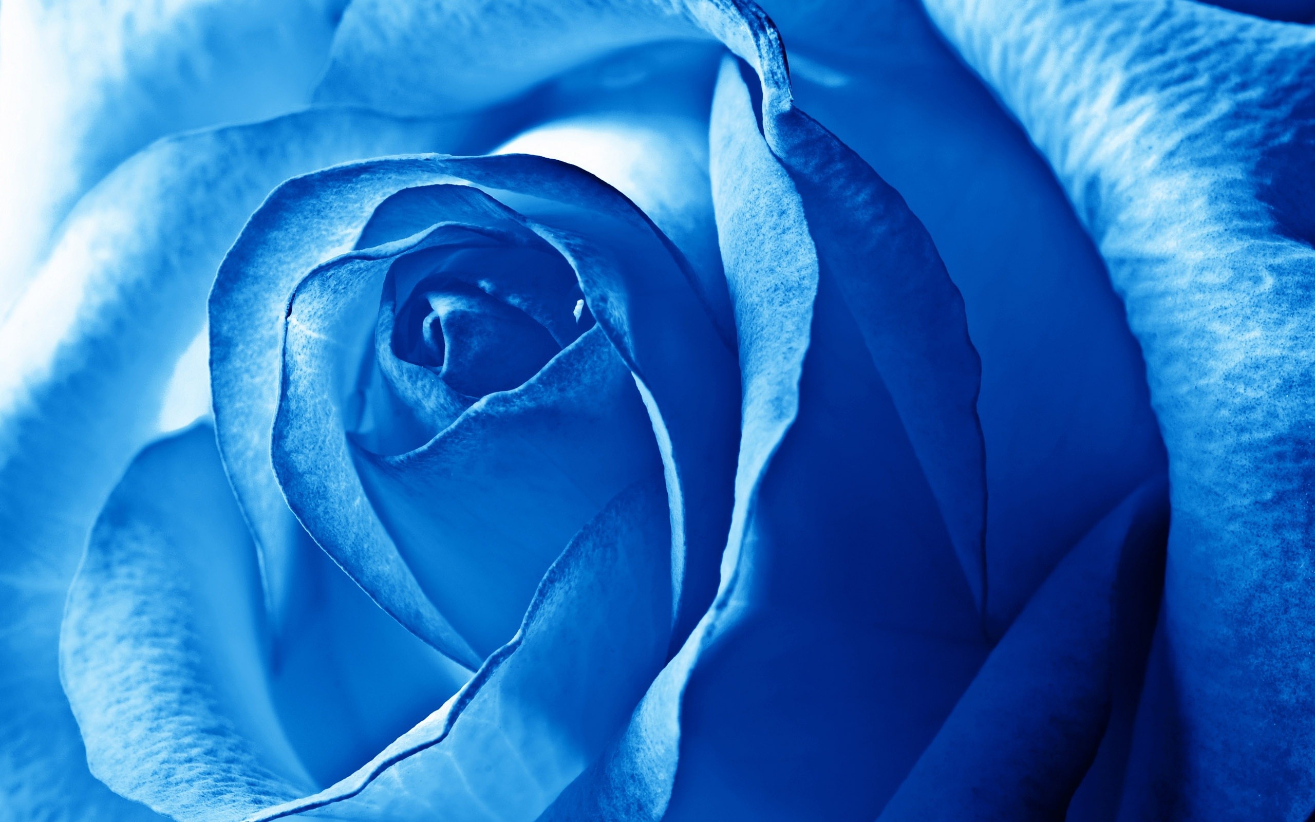 Res: 2560x1600, Blue Flower