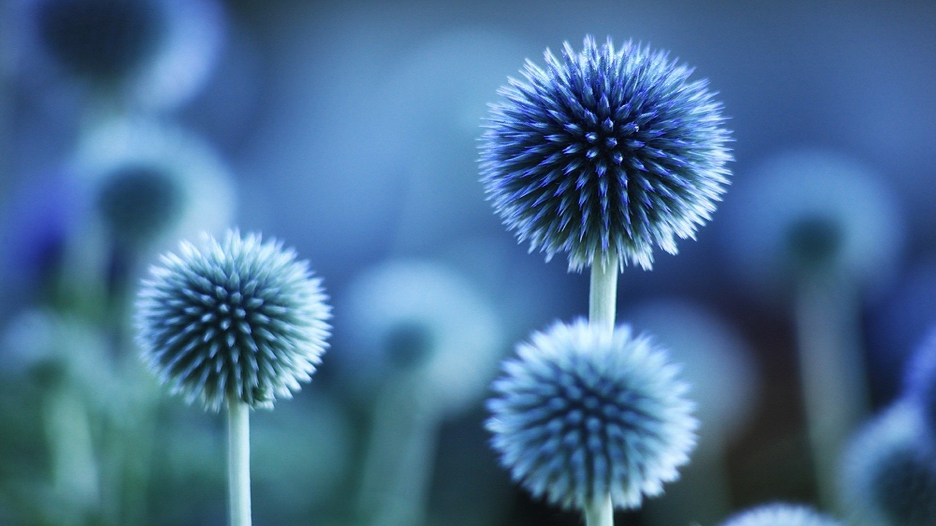 Res: 1920x1080, Blue Flower HD Background. Previous Wallpaper