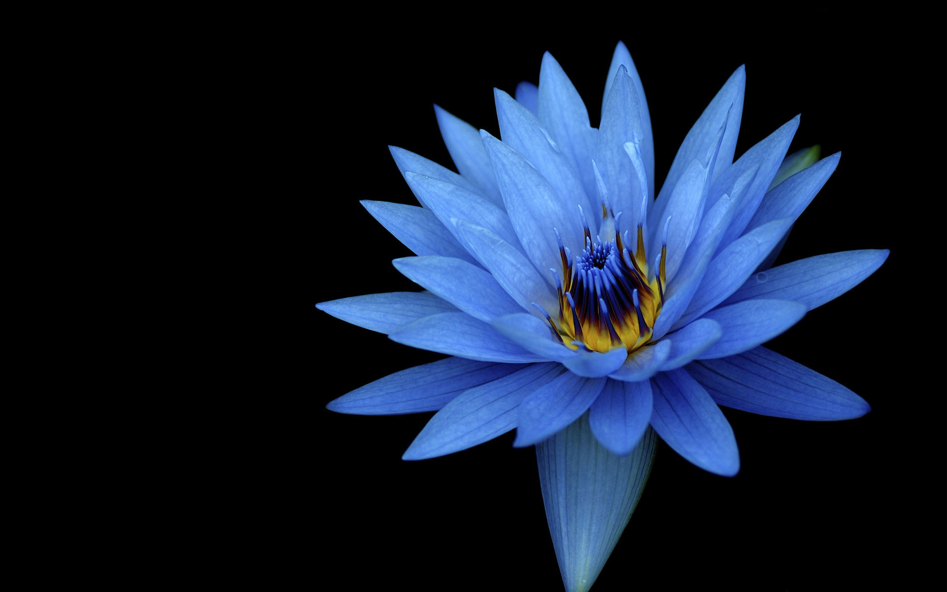 Res: 1920x1200, Tags: Blue flower ...