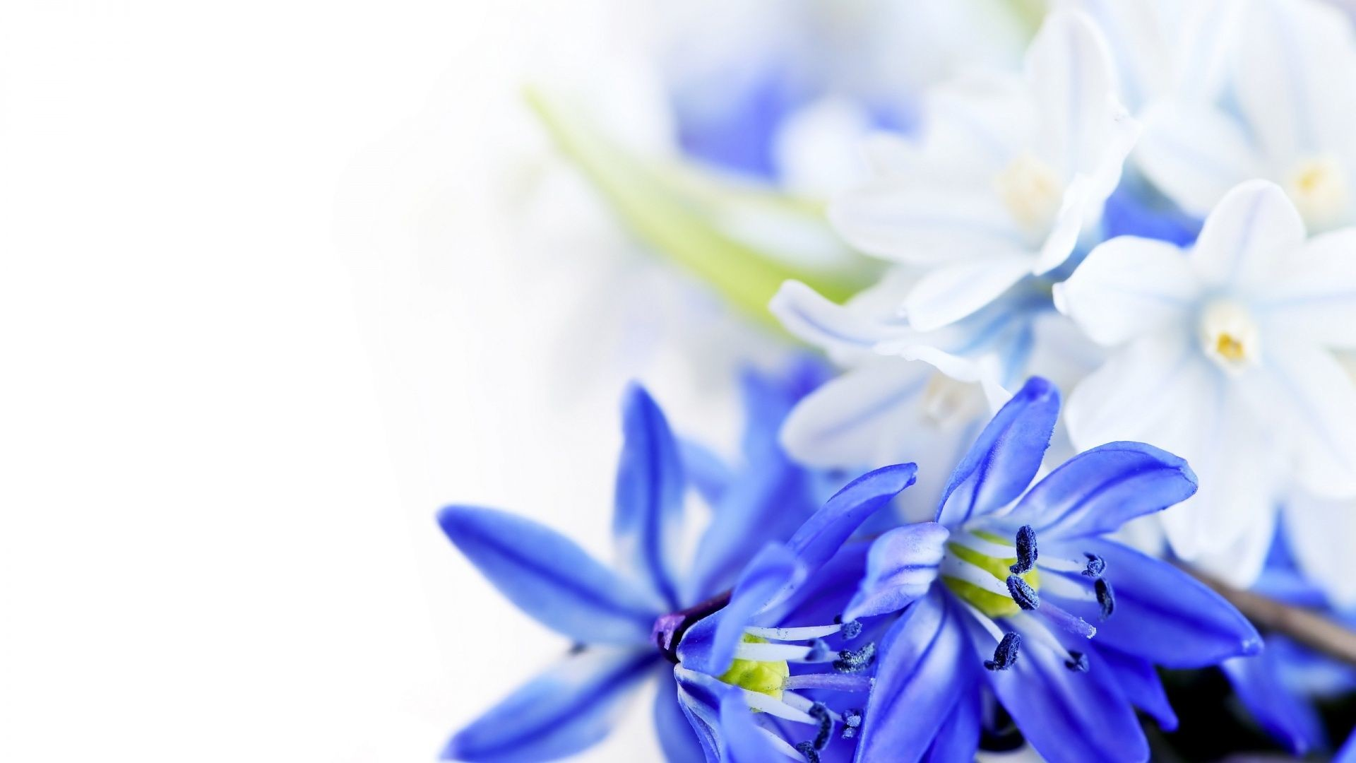 Res: 1920x1080, Blue Flowers wallpaper |  | #66279