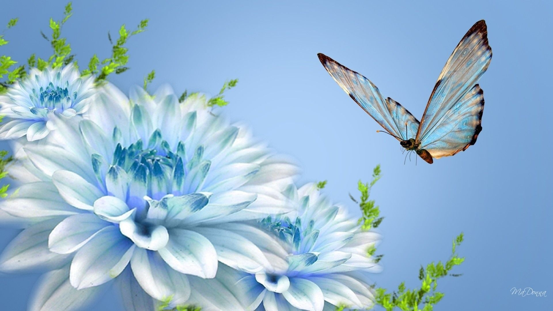 Res: 1920x1080, HD Blue Flower Wallpaper