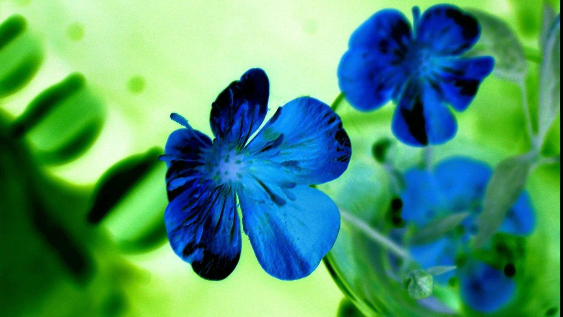 Res: 1920x1080, Hd Flower Wallpaper 1080p Backgrounds Blue Flowers Of Desktop