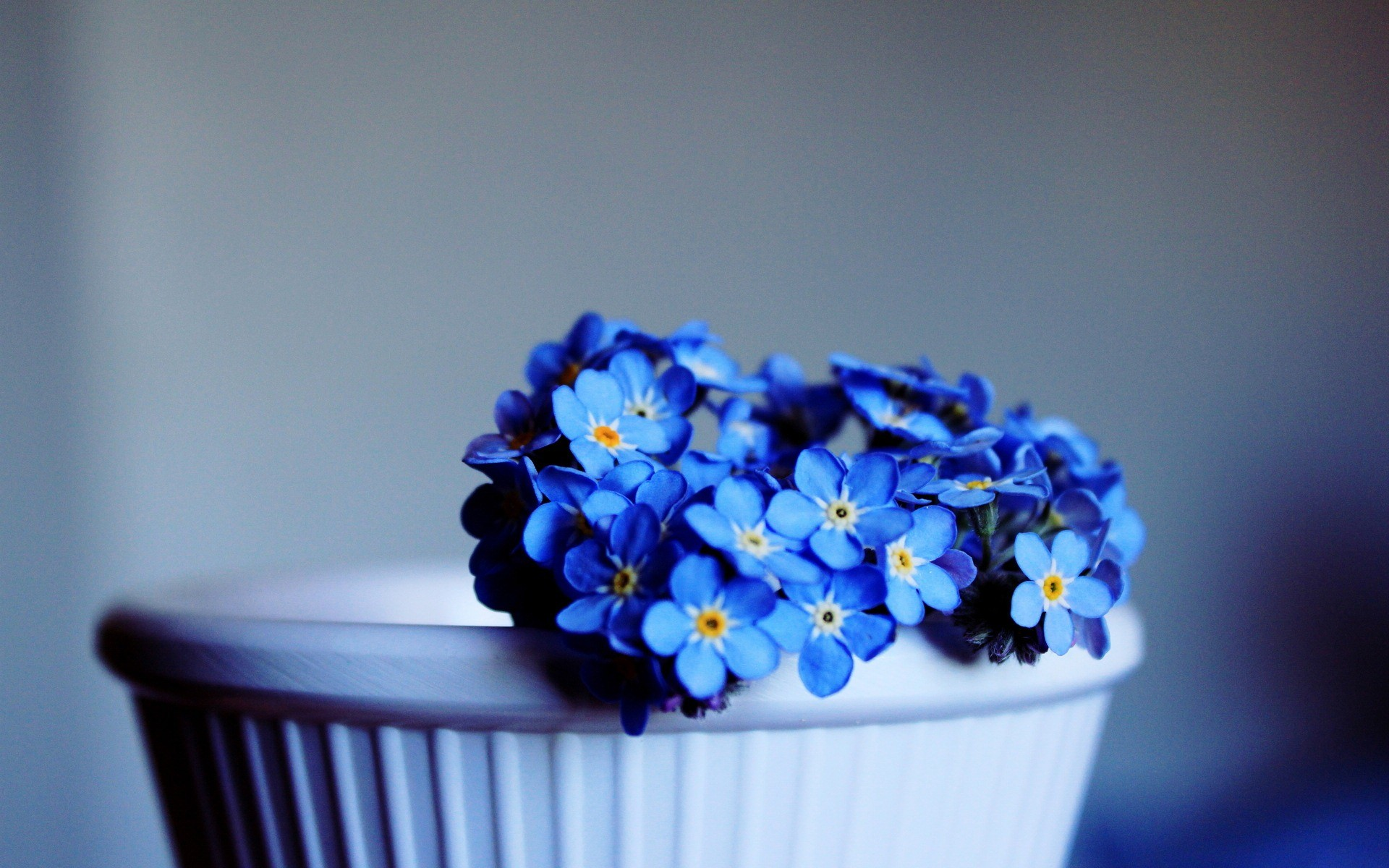 Res: 1920x1200, 343 Blue Flower HD Wallpapers | Background Images - Wallpaper Abyss - Page 2