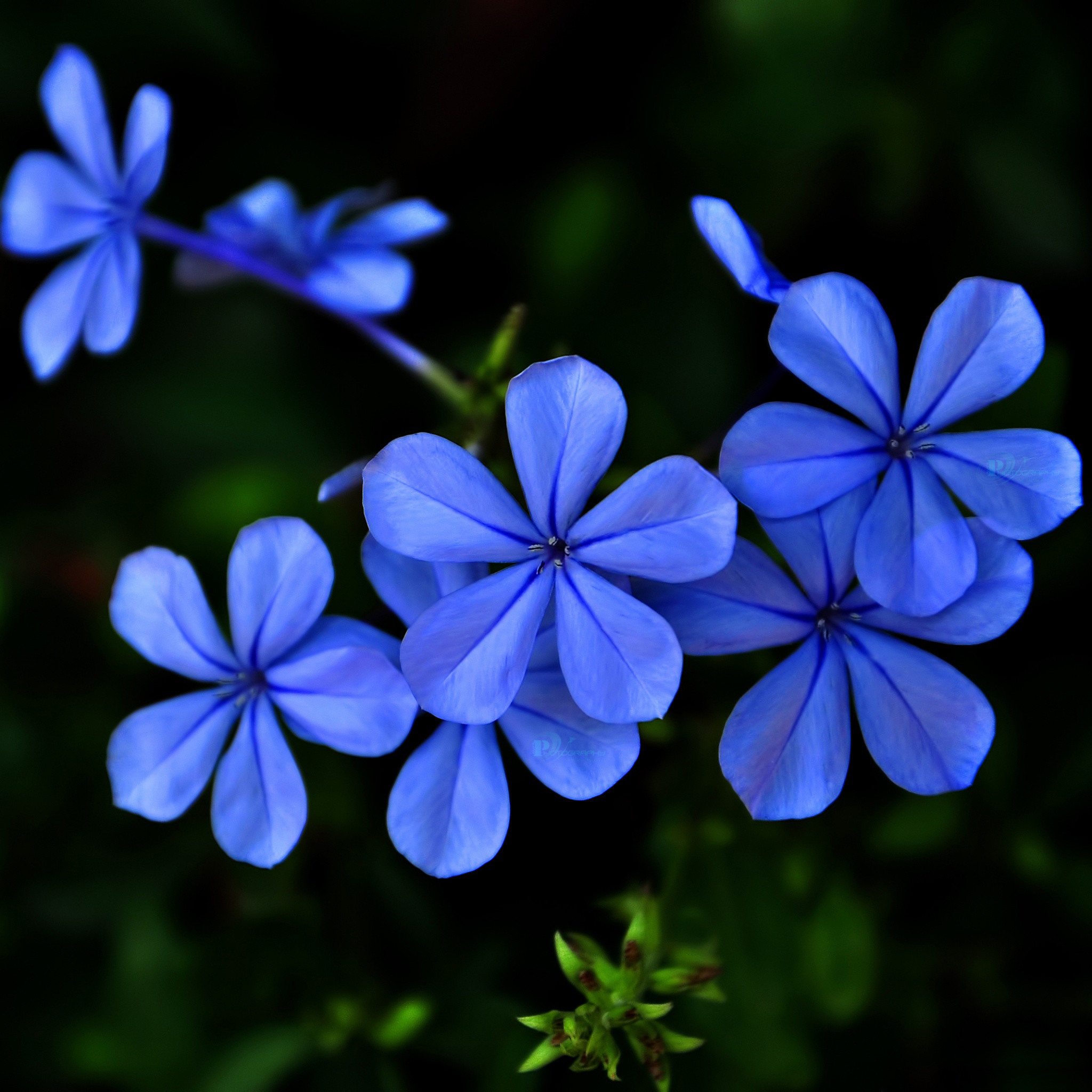 Res: 2048x2048, purple blue flower