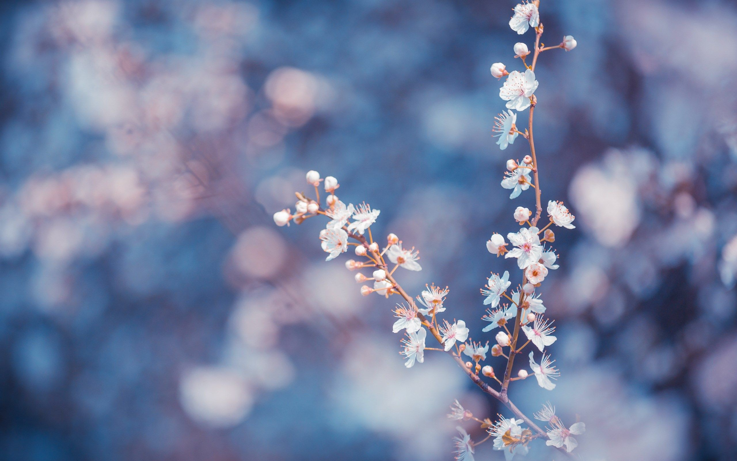 Res: 2560x1600, blue flowers tumblr - Поиск в Google