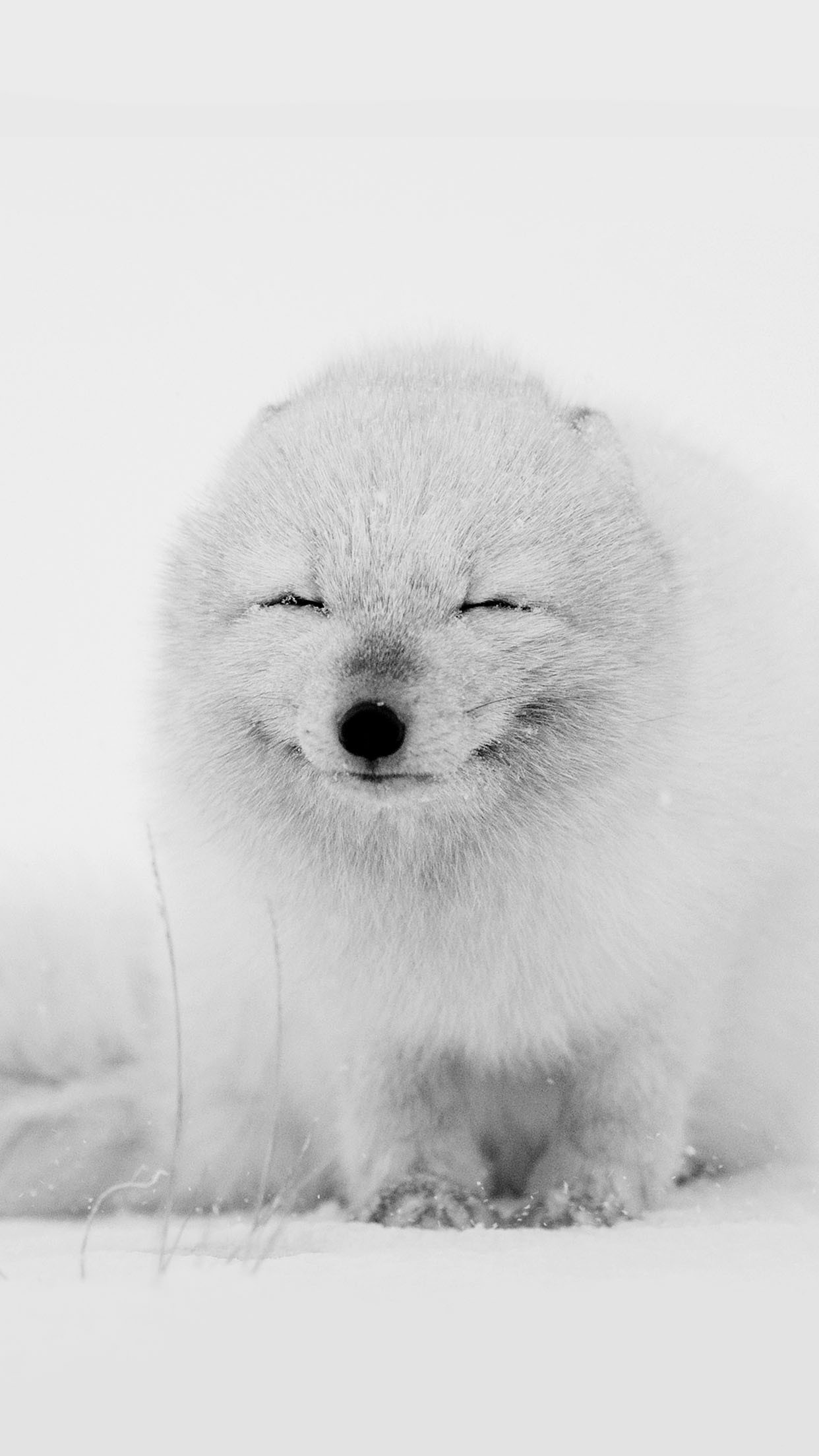 Res: 1242x2208, Arctic Fox Cute Snow Android Wallpaper ...