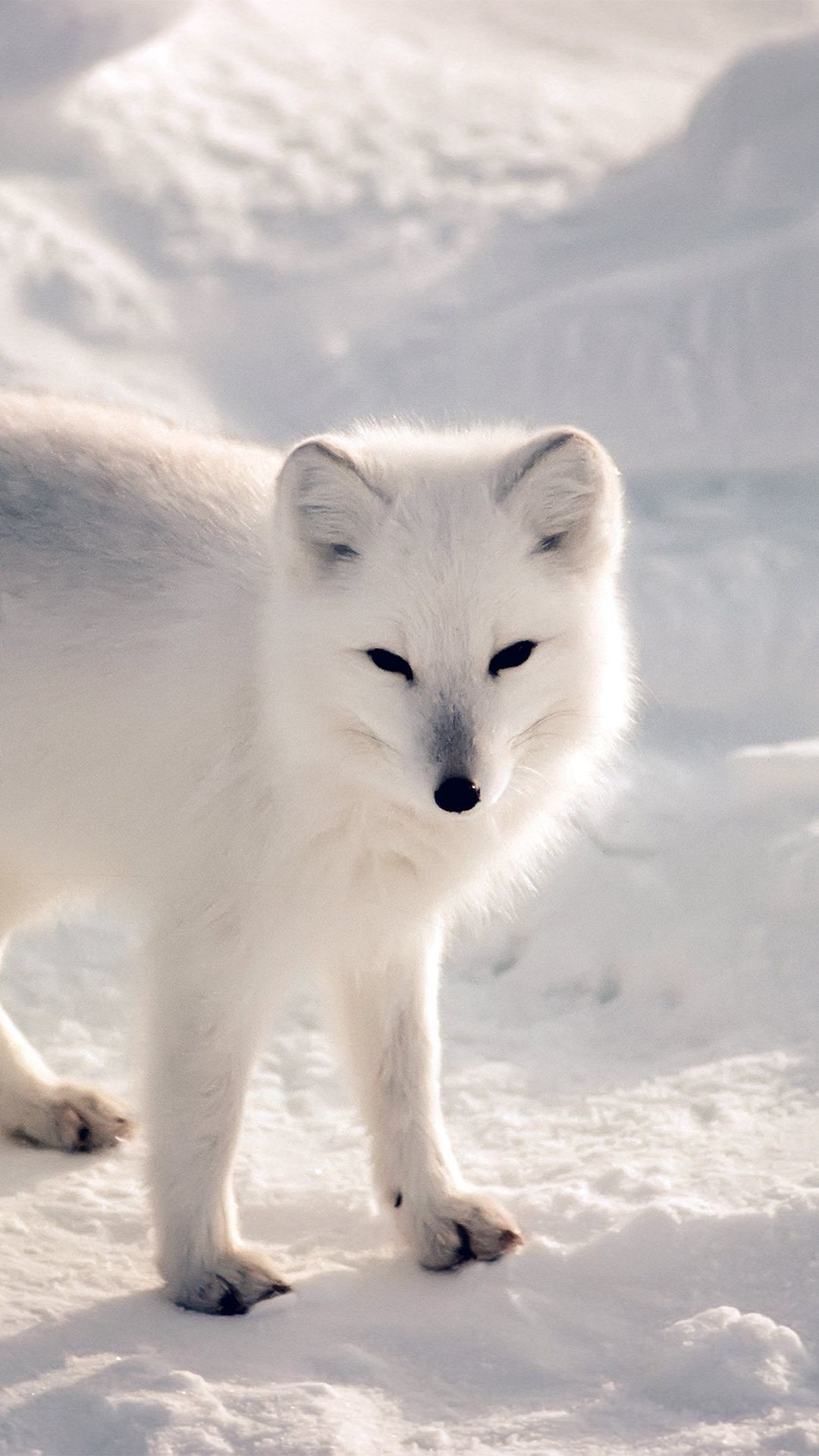 Res: 1080x1920, White Artic Fox Snow Winter Animal iPhone 6 wallpaper