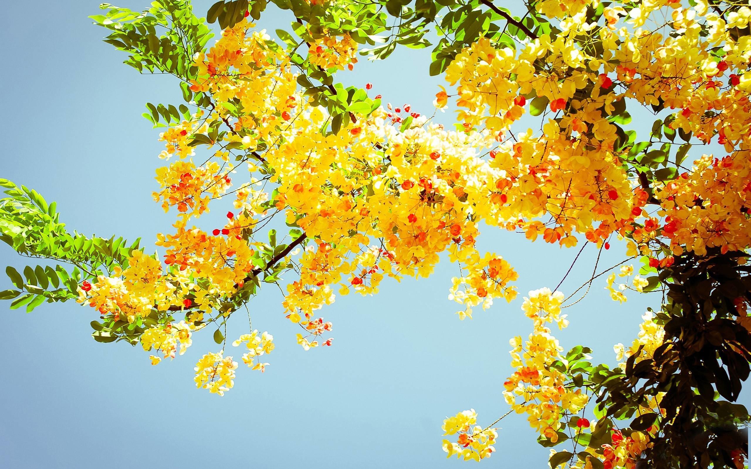 Res: 2560x1600, Summer Beach Scenes Desktop Wallpaper