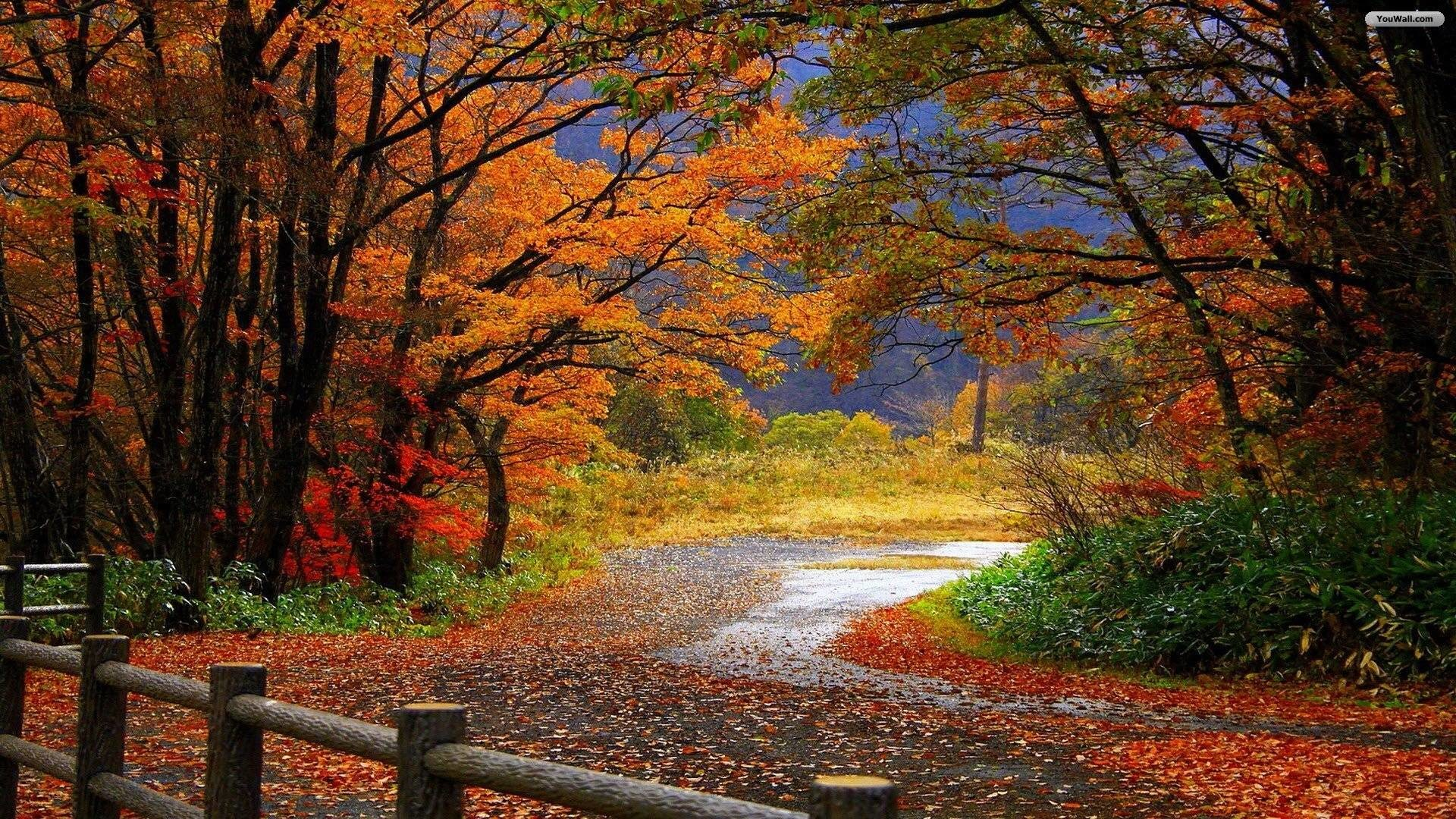 Res: 1920x1080, autumn-scenery-wallpaper scenery wallpaper HD free wallpapers .