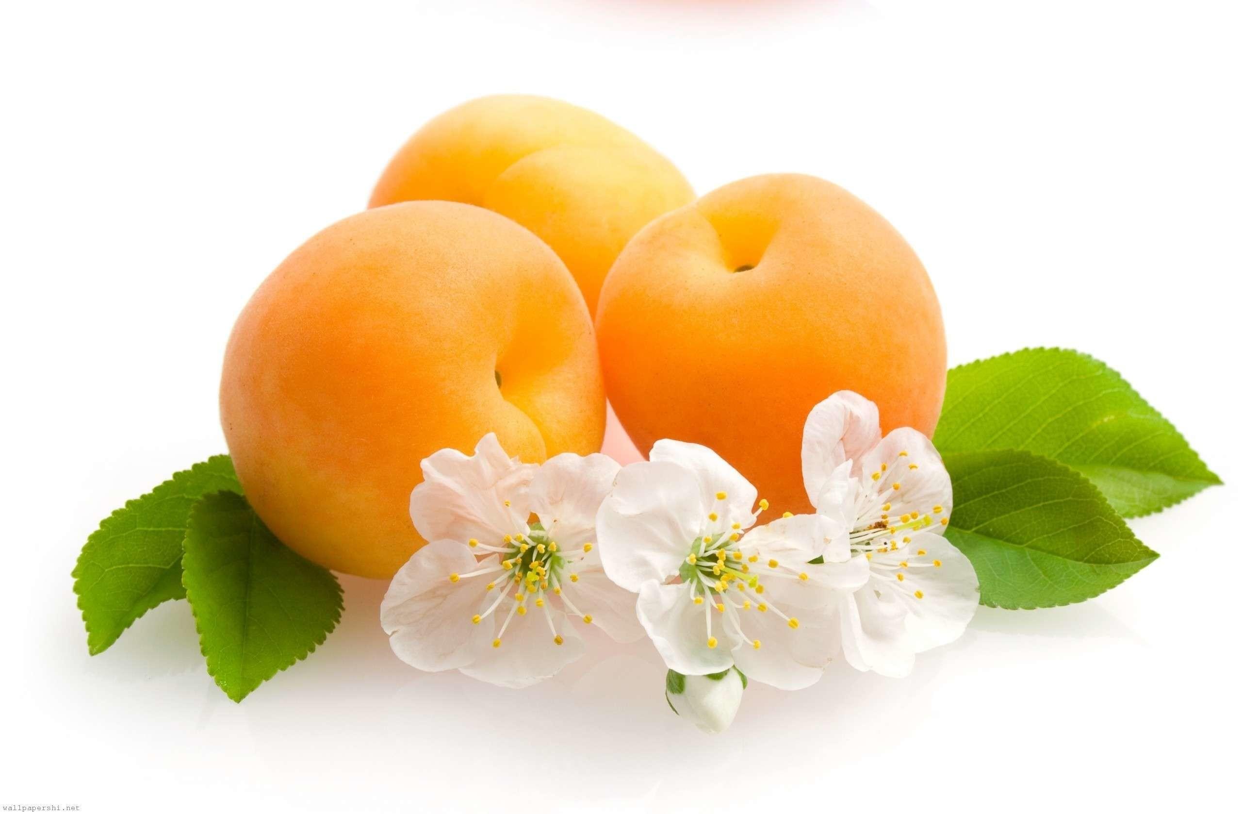 Res: 2560x1677, Apricot Fruit Wallpaper HD Desktop Images