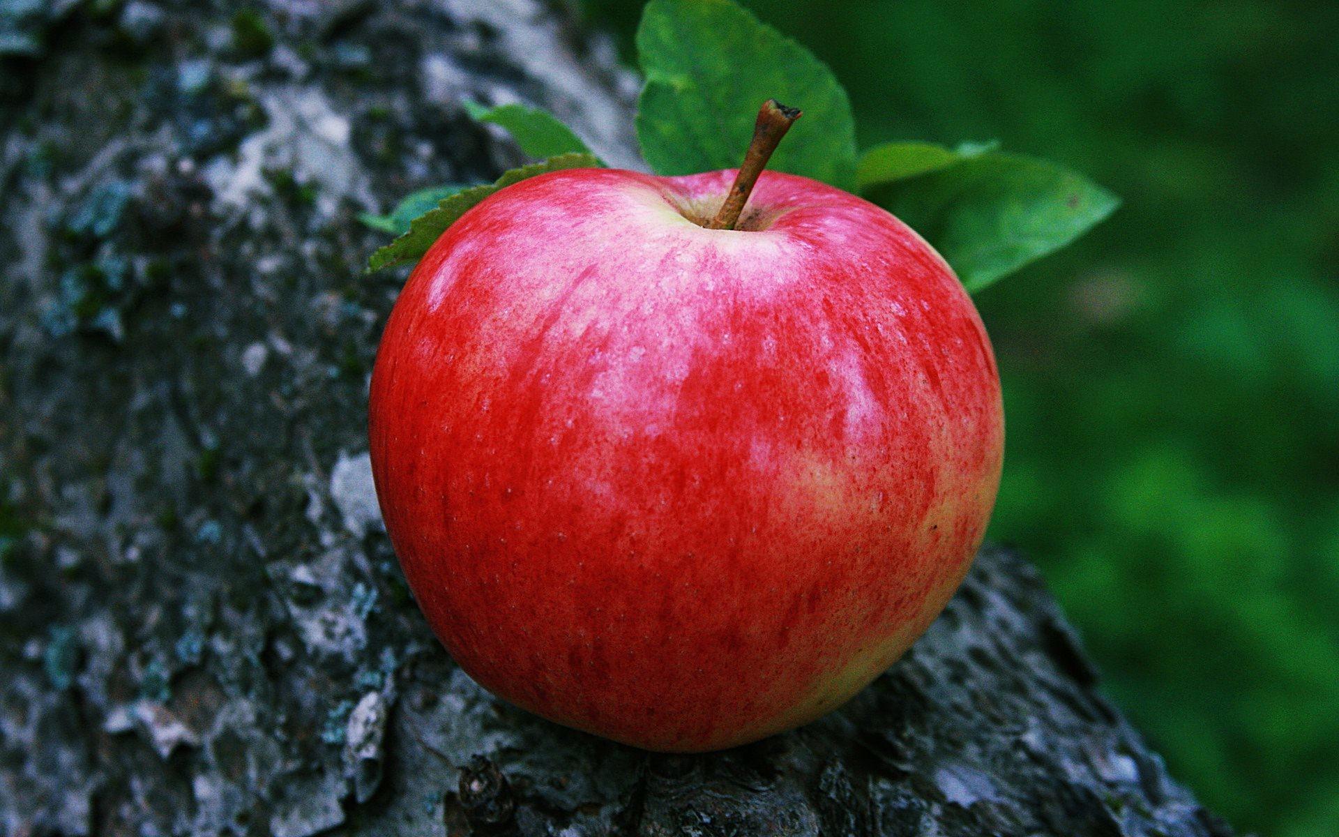 Res: 1920x1200, desktop red apple fruitss wallpapers download