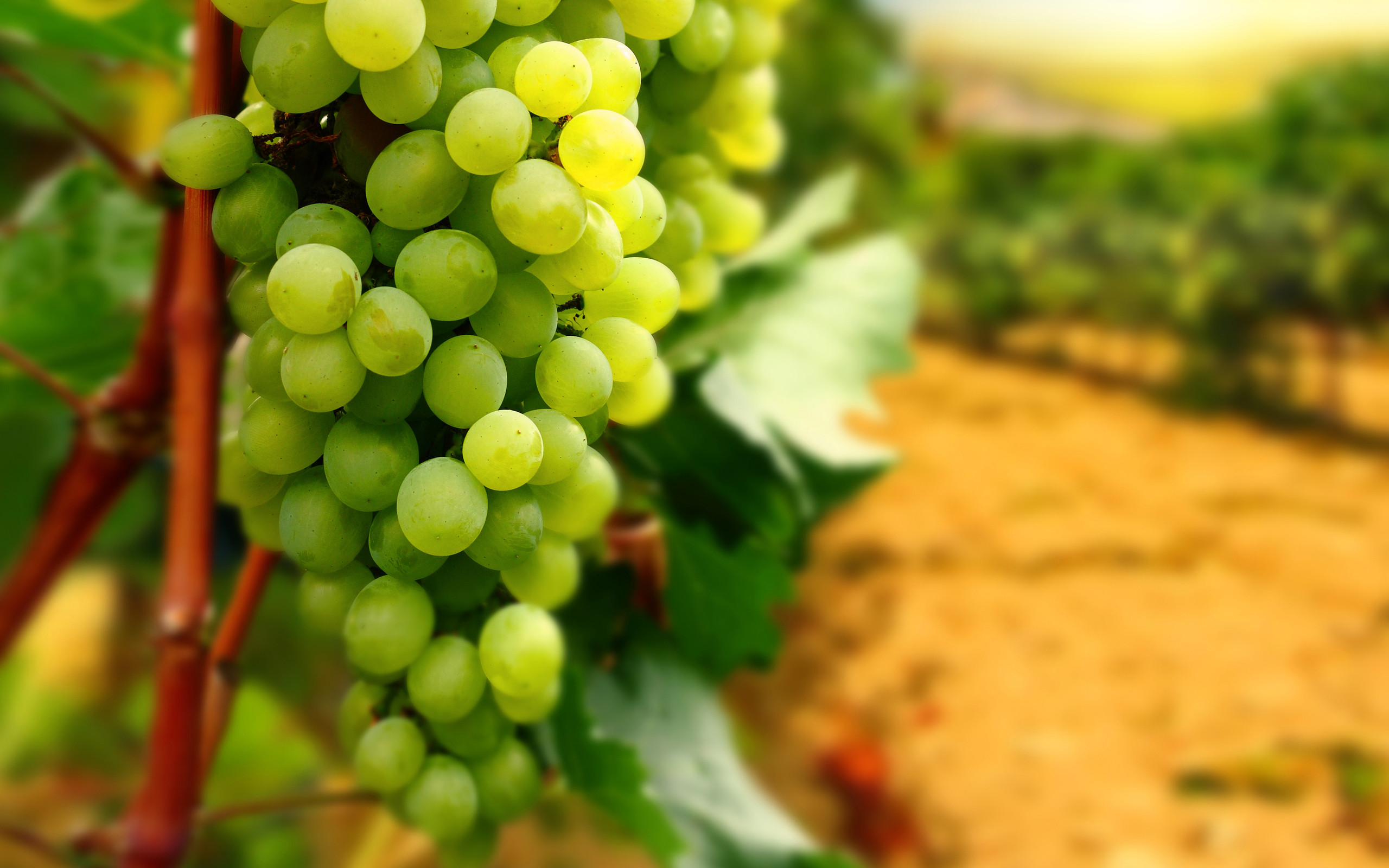 Res: 2560x1600, Beautiful Grapes Fruit Wallpapers