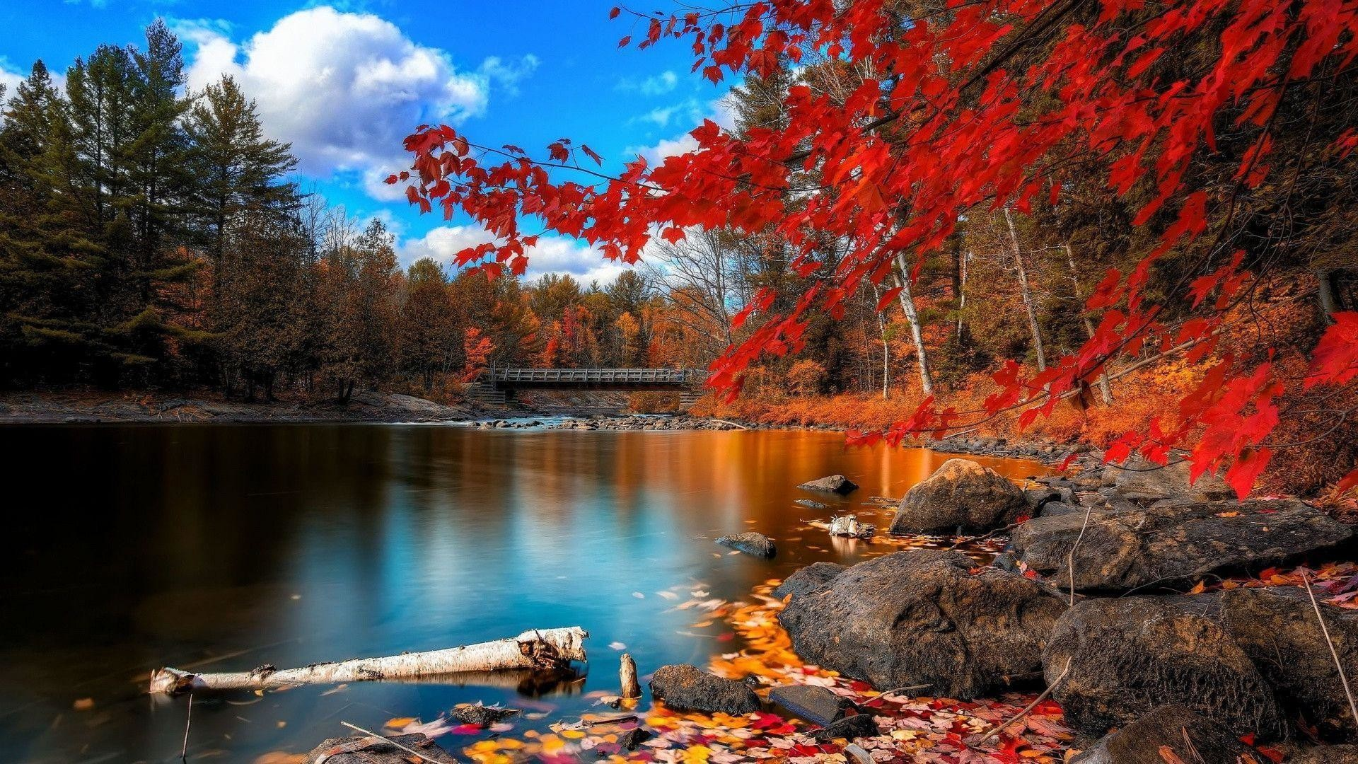 Res: 1920x1080,  Autumn Forest Scenery Wallpaper