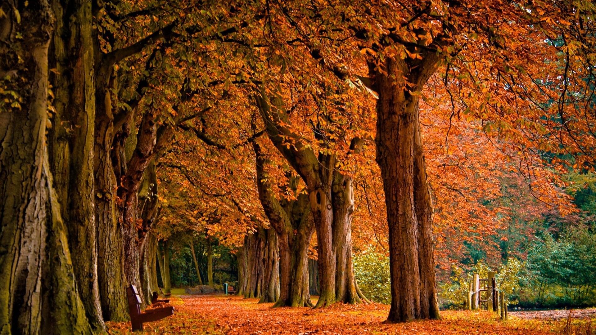 Res: 1920x1080, Autumn Background