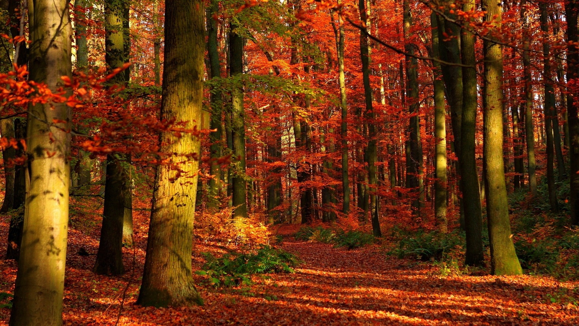 Res: 1920x1080,  Wallpaper autumn, wood, leaves, trees, red, gleams