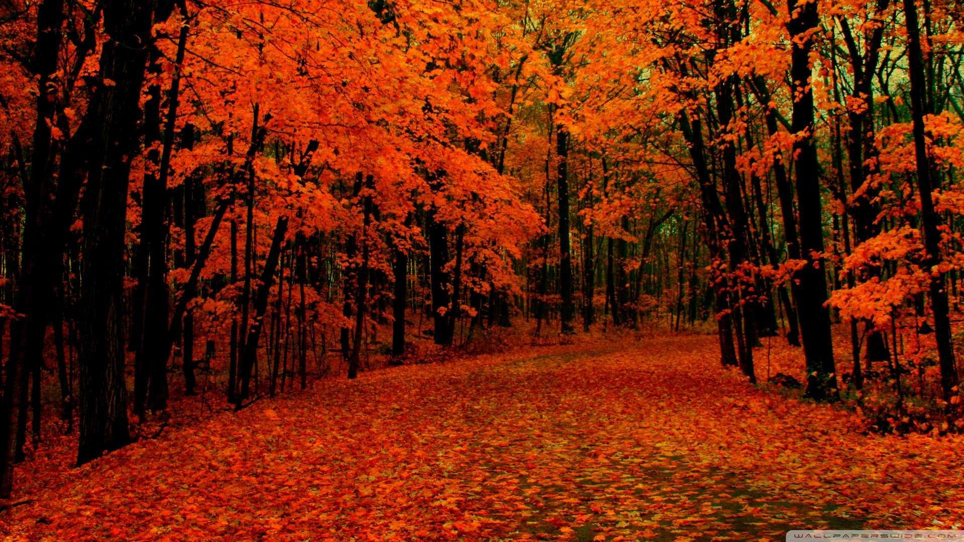 Res: 1920x1080, Fall Wallpapers 11 - 1920 X 1080
