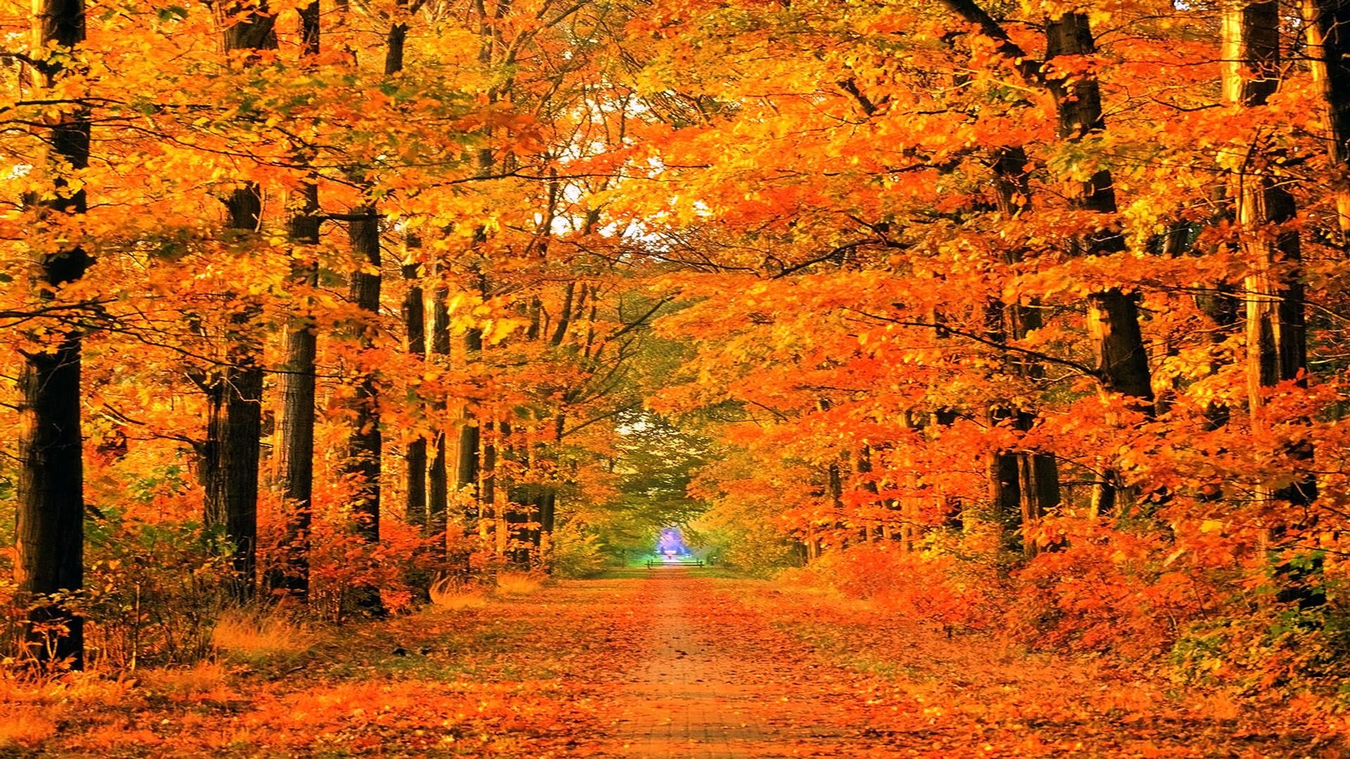 Res: 1920x1080,  Autumn Road Full HD Wallpaper and Background Image       ID .