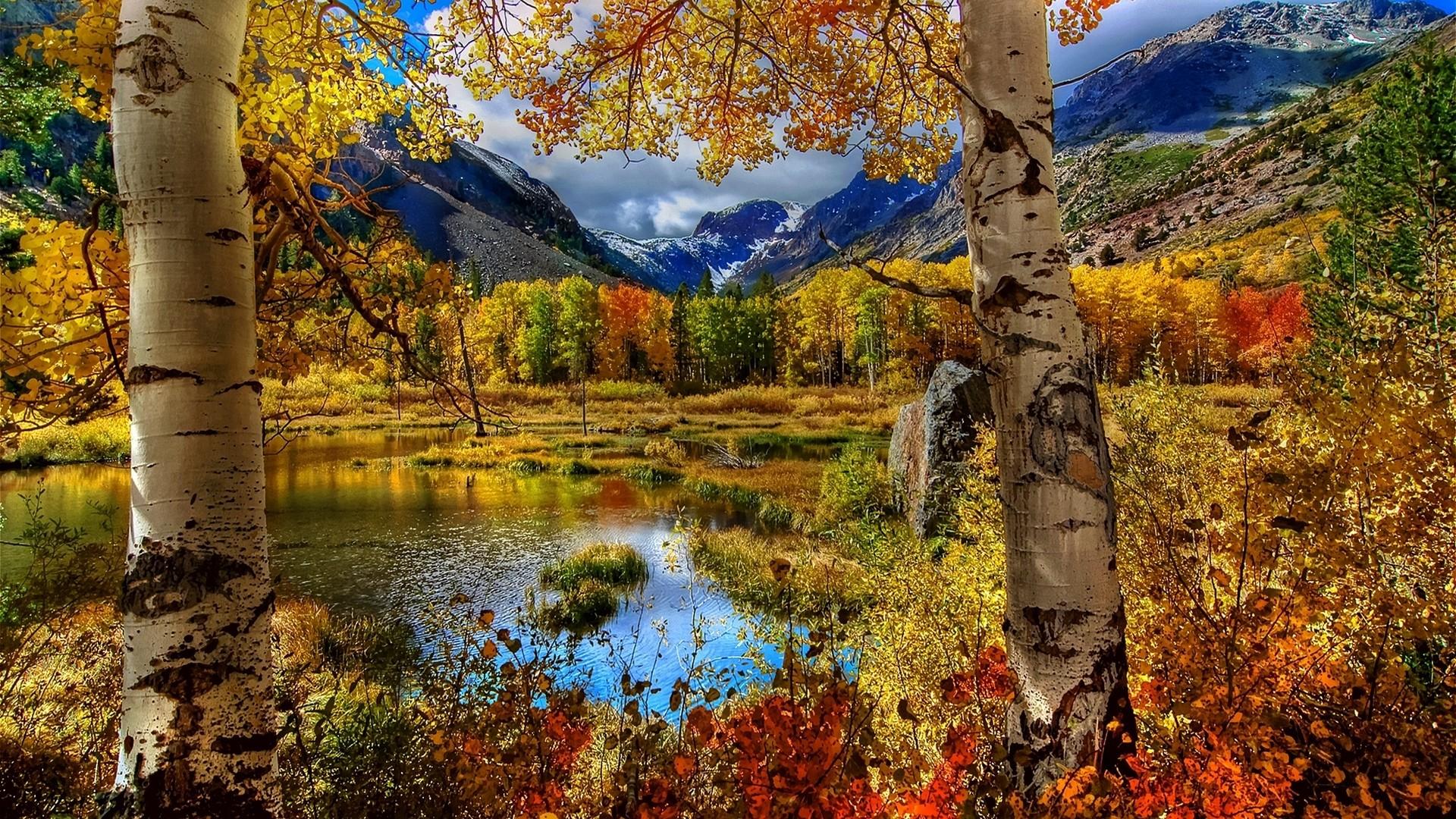 Res: 1920x1080,  Wallpaper autumn, birch, color, paint, plants, pond, mountain,